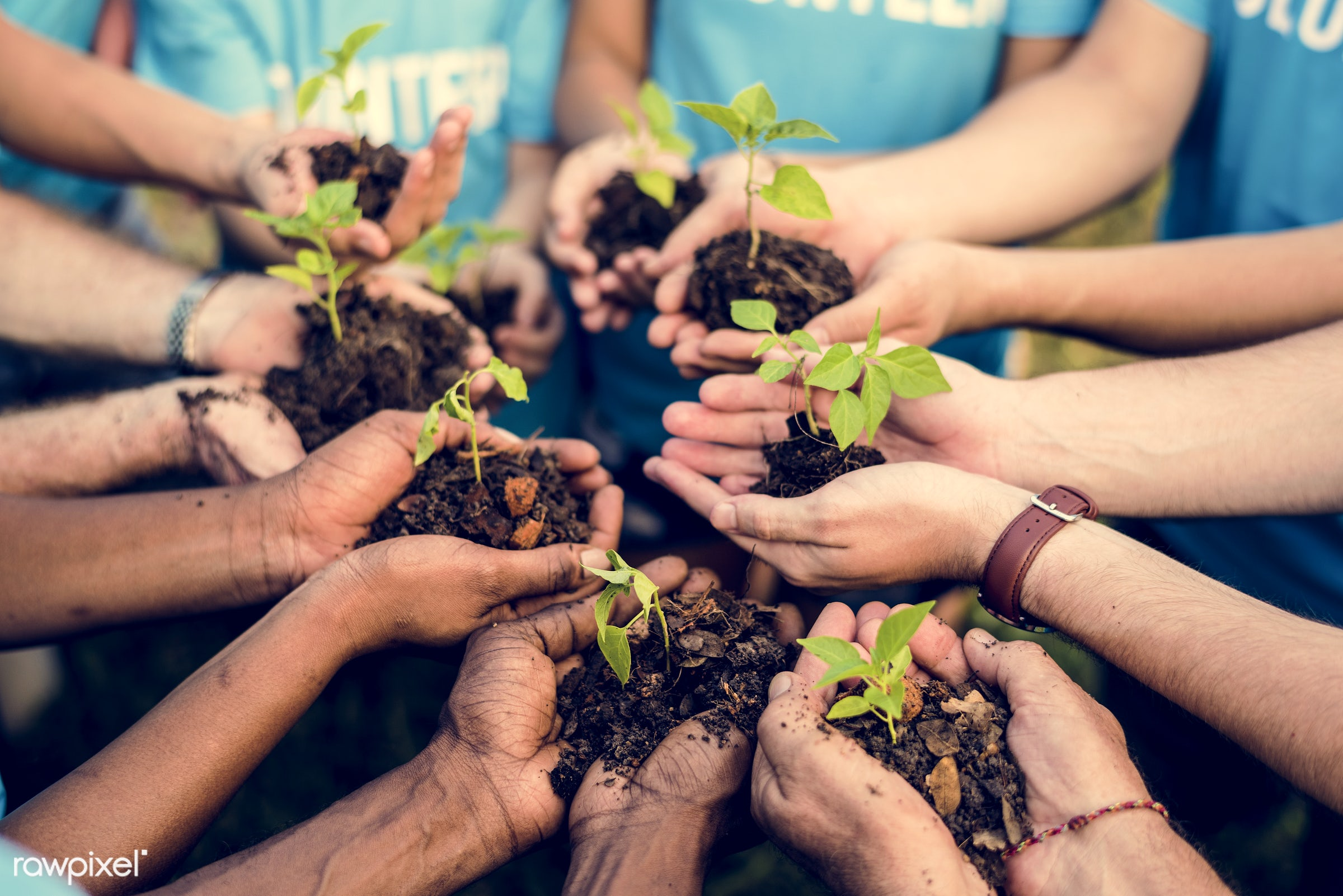 plant, holding, relax, people, teamwork, friends, conservation, hands, friendship, cooperation, ecology, aerial view,...