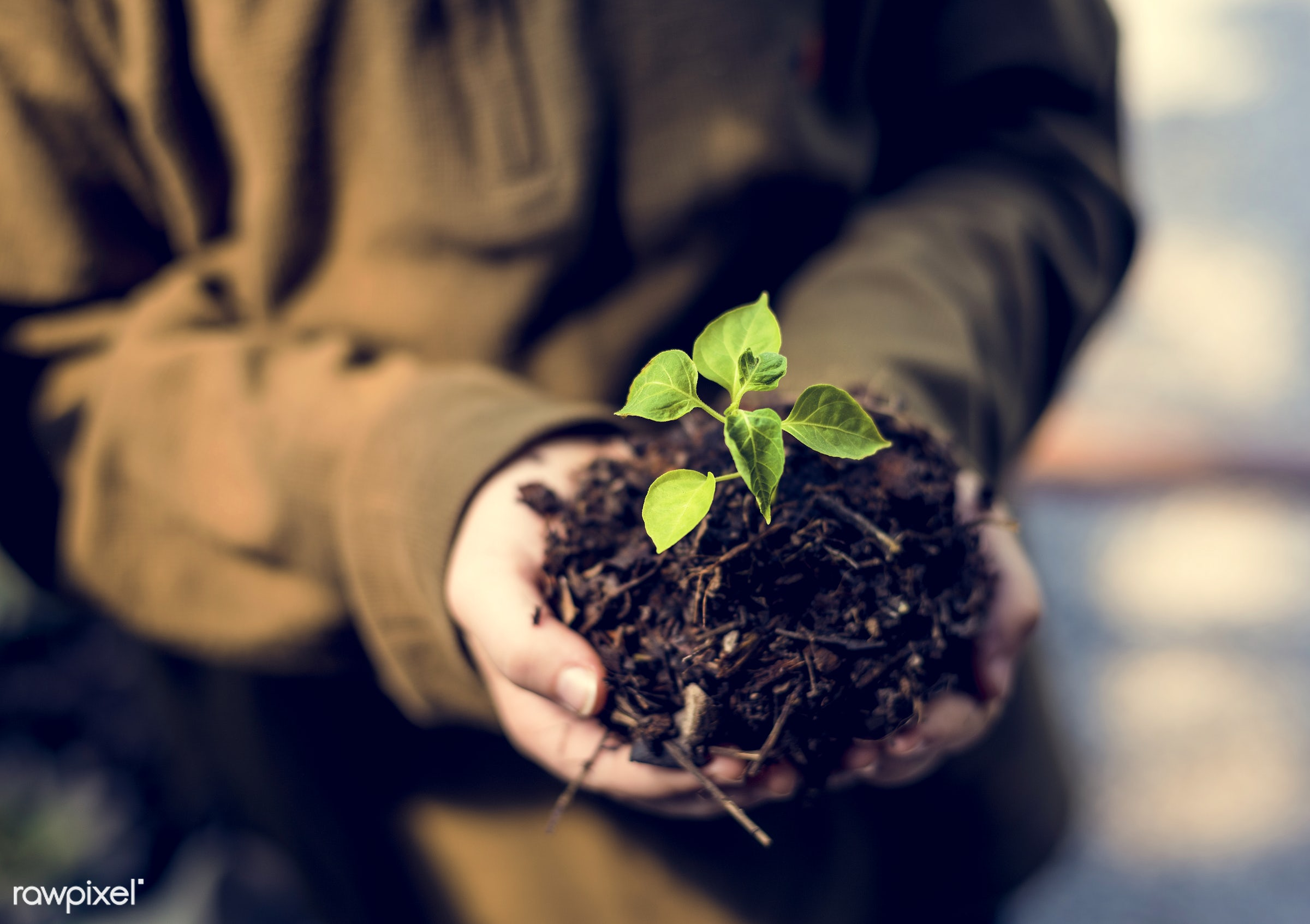 plant, concept, botany, ground, leaf, people, hand, life, tree, sustain, nature, conservation, care, ecology, green, hold,...