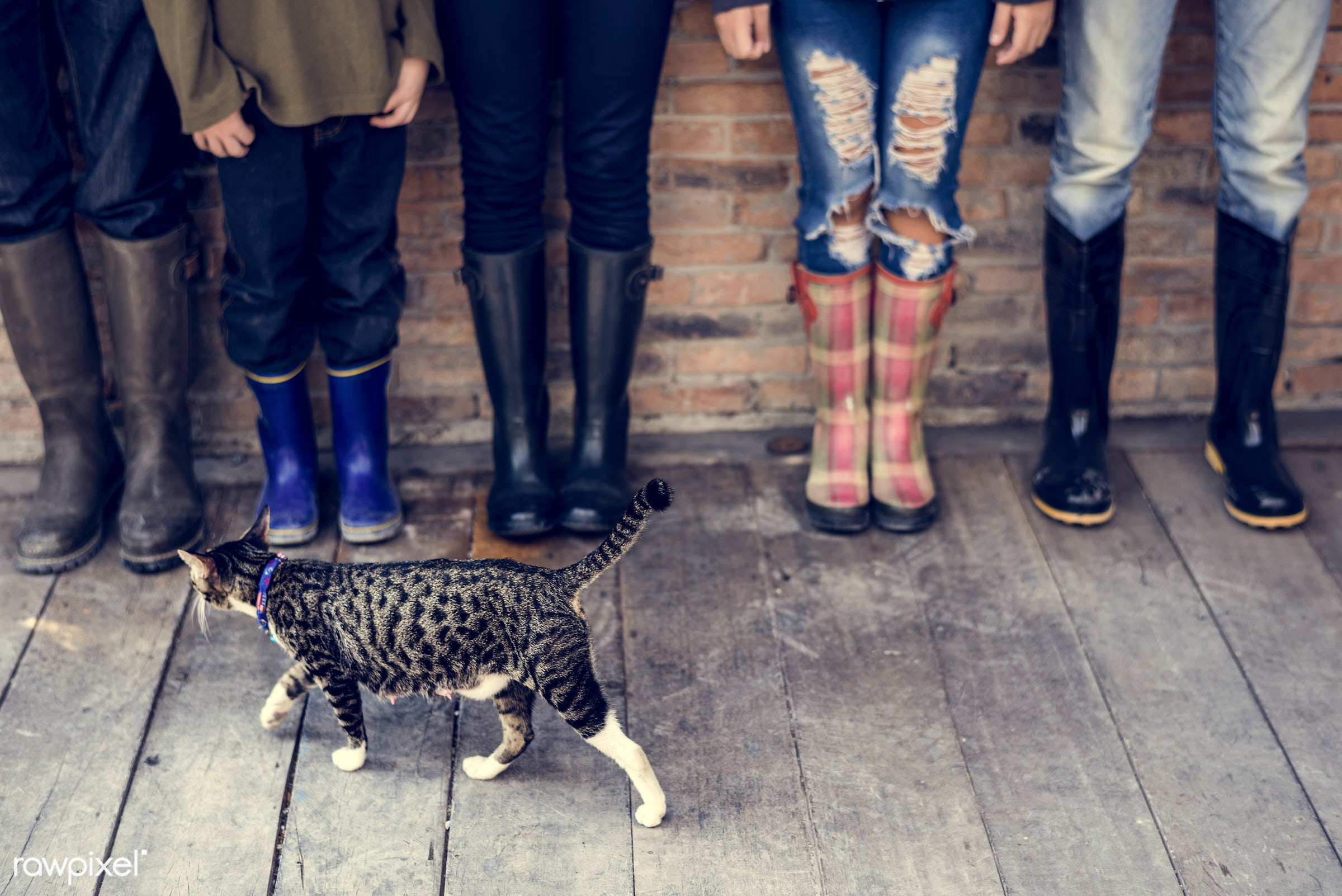 copy space, cat, brick wall, brick, wooden floor, children, plank, people, human leg, family, men, boots, blank, in a row,...