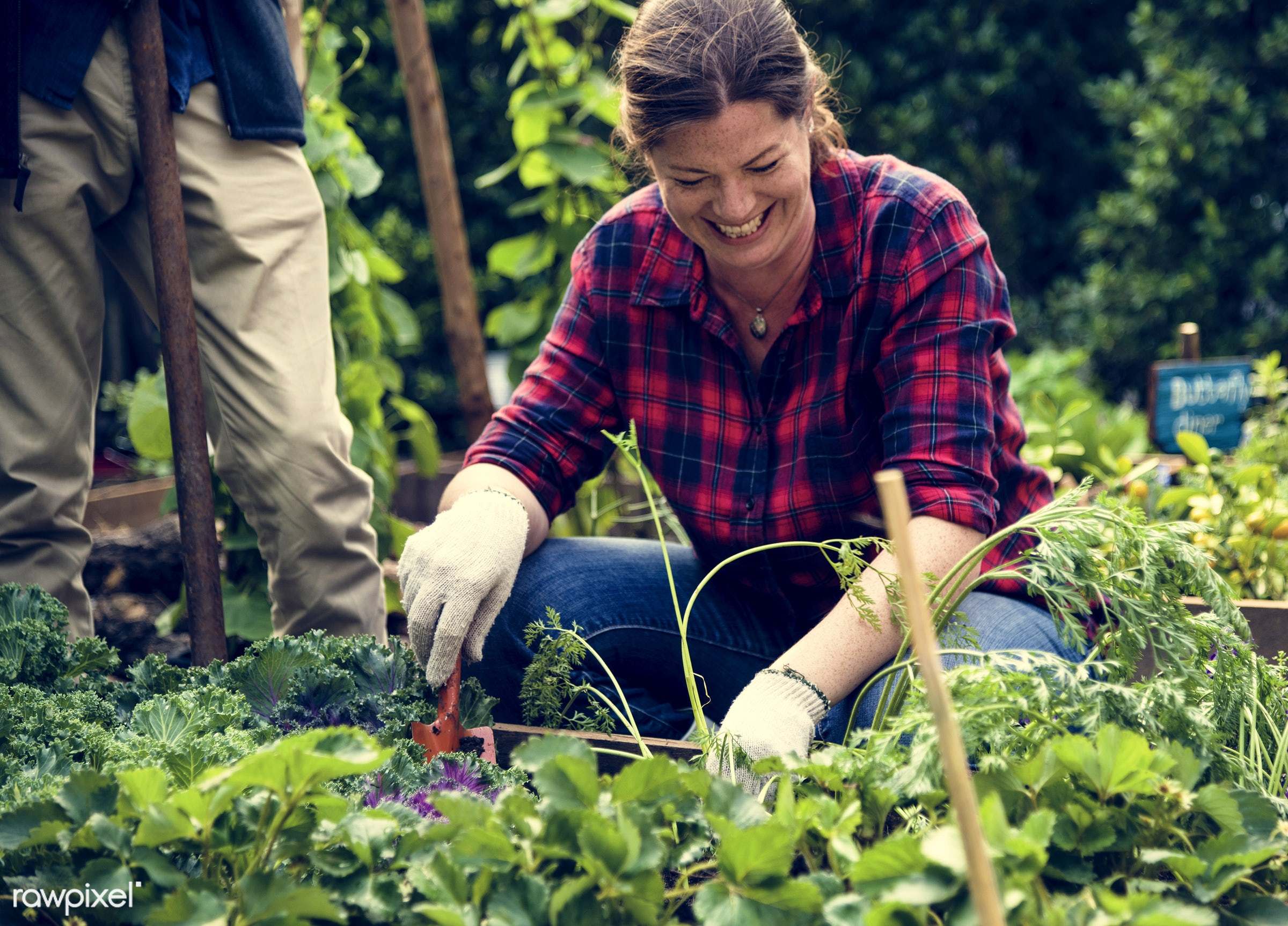 plant, tomato, nutritious, greenhouse, friends, farmer, fresh, woman, lettuce, healthy eating, friendship, smile, cheerful,...