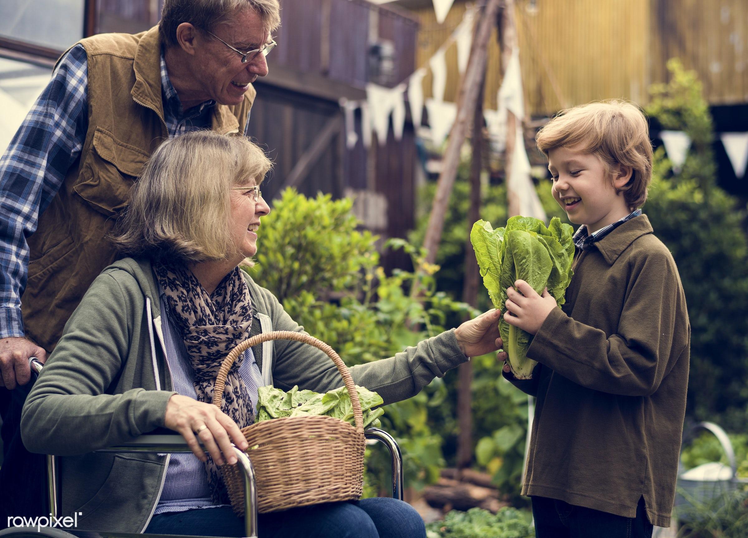 plant, nutritious, carrot, grandfather, basil, farmer, fresh, wheelchair, lettuce, family, woman, healthy eating, grandson,...