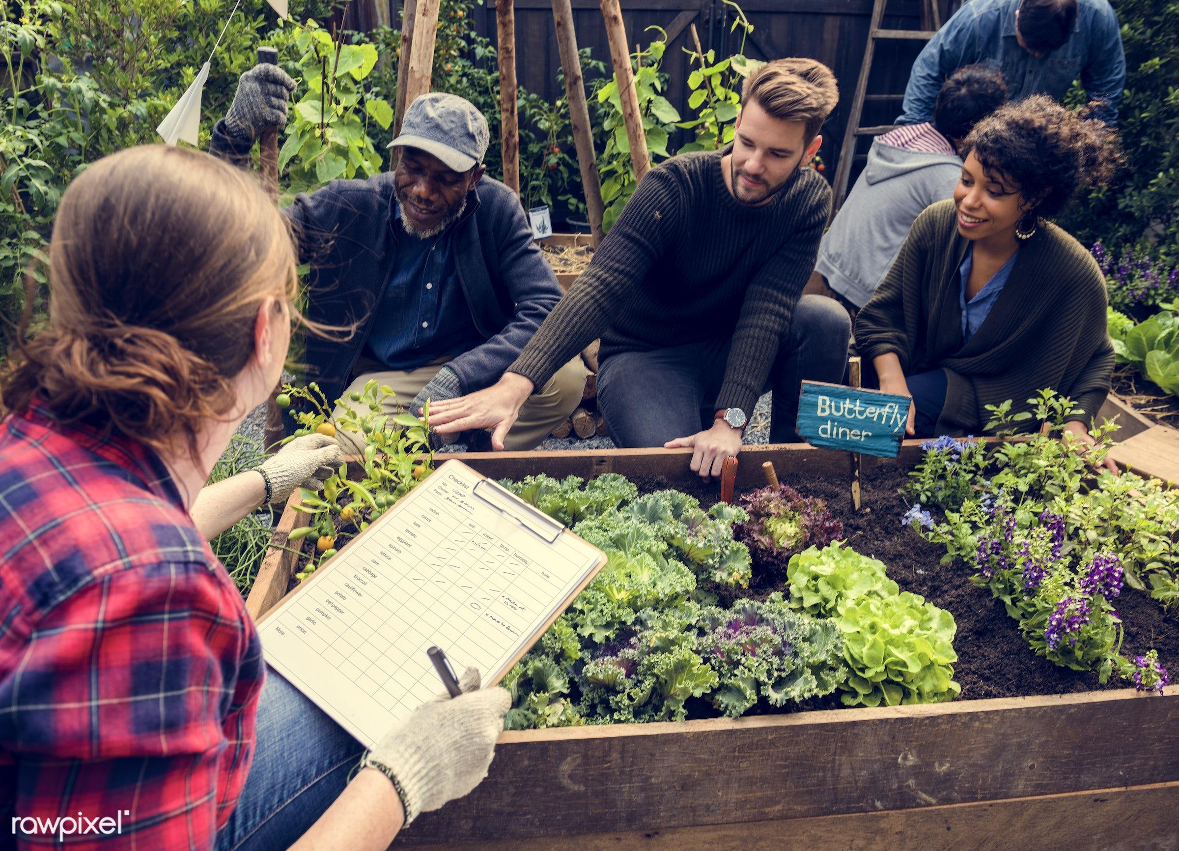 plant, nutritious, greenhouse, writing, friends, farmer, fresh, lettuce, healthy eating, friendship, men, checking, flower,...