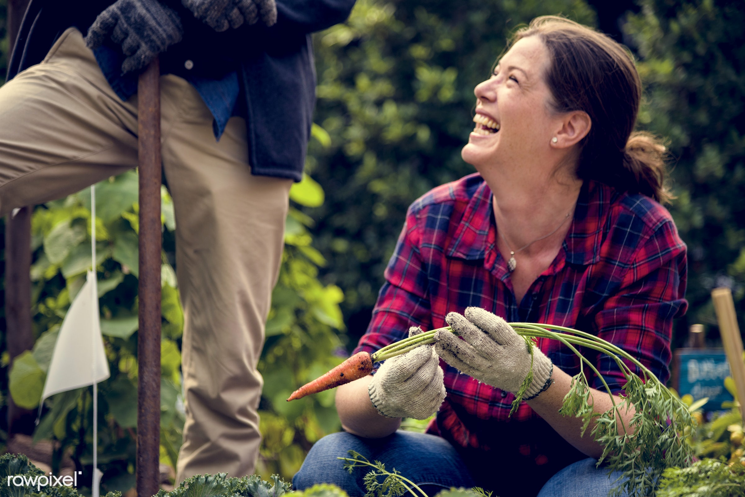 plant, nutritious, tomato, carrot, greenhouse, friends, farmer, fresh, lettuce, woman, healthy eating, friendship, smile,...