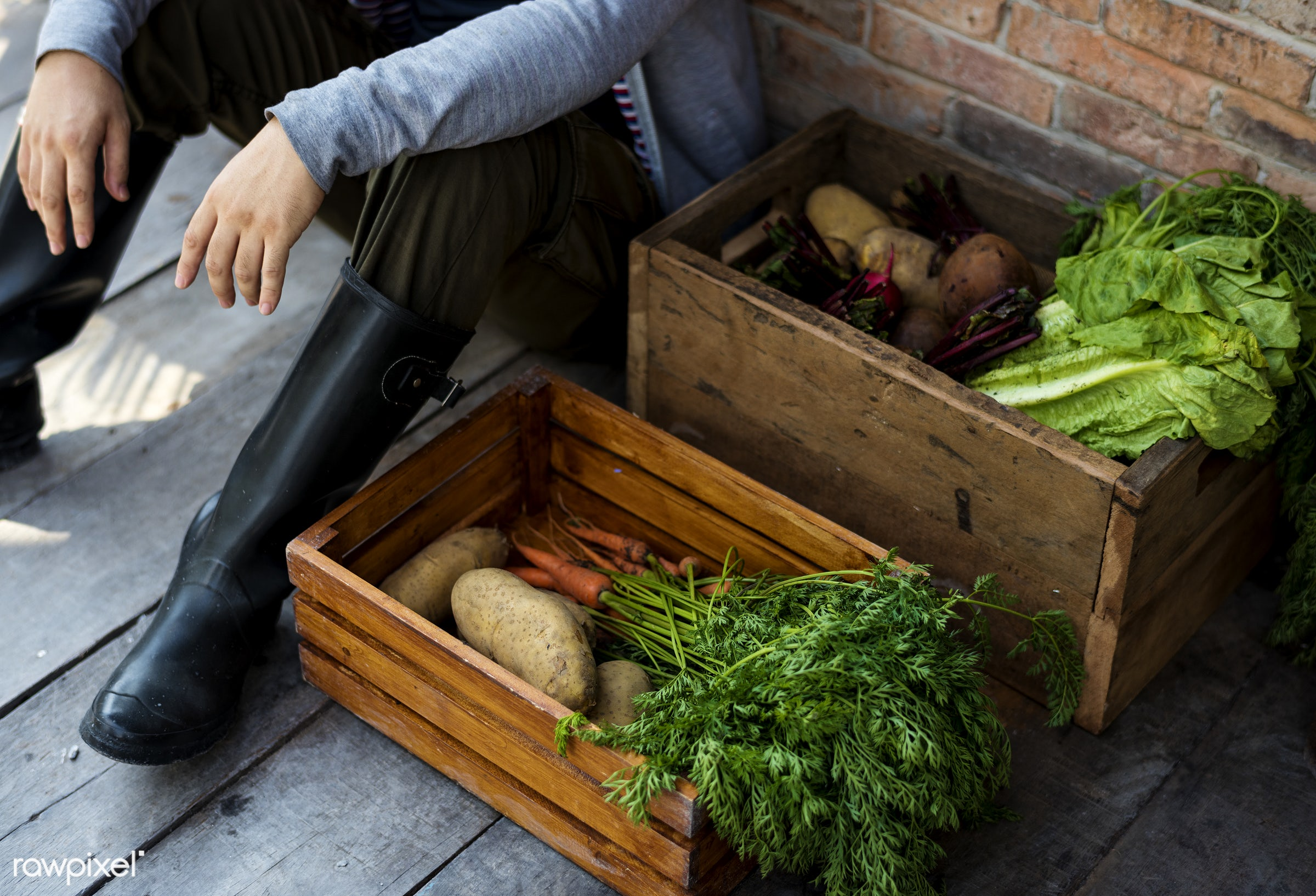 person, store, leaves, people, crop, stock, farmer, nature, cultivation, agriculture, nutrition, sitting, harvesting, food,...
