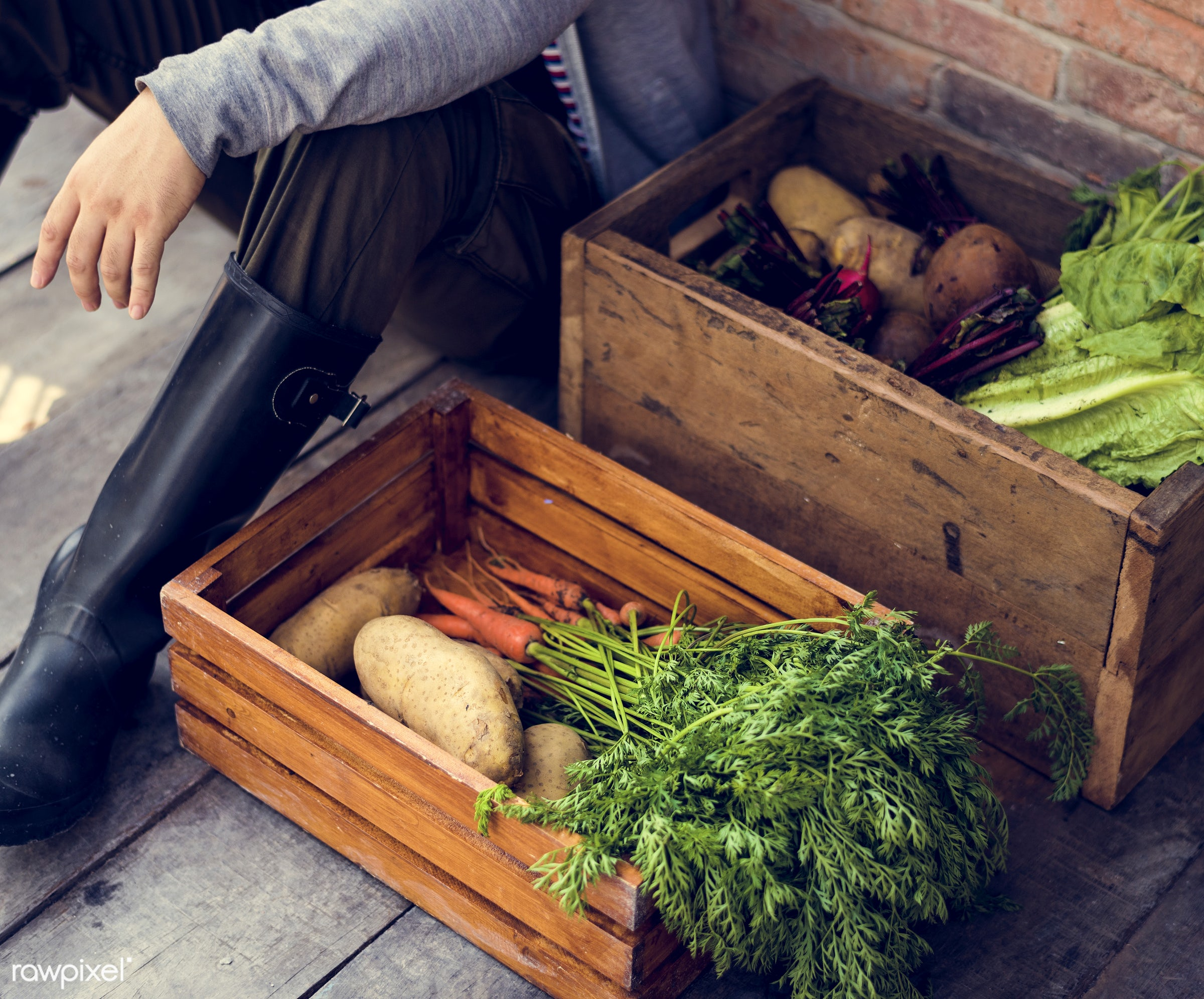 carrot, nutritious, farmer, fresh, lettuce, agriculture, beetroot, radish, agricultural, product, organic, nutrition,...