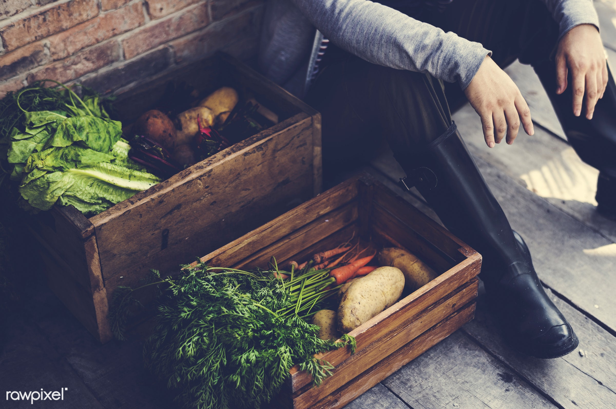 nutritious, carrot, farmer, fresh, lettuce, agriculture, beetroot, radish, agricultural, product, nutrition, organic,...