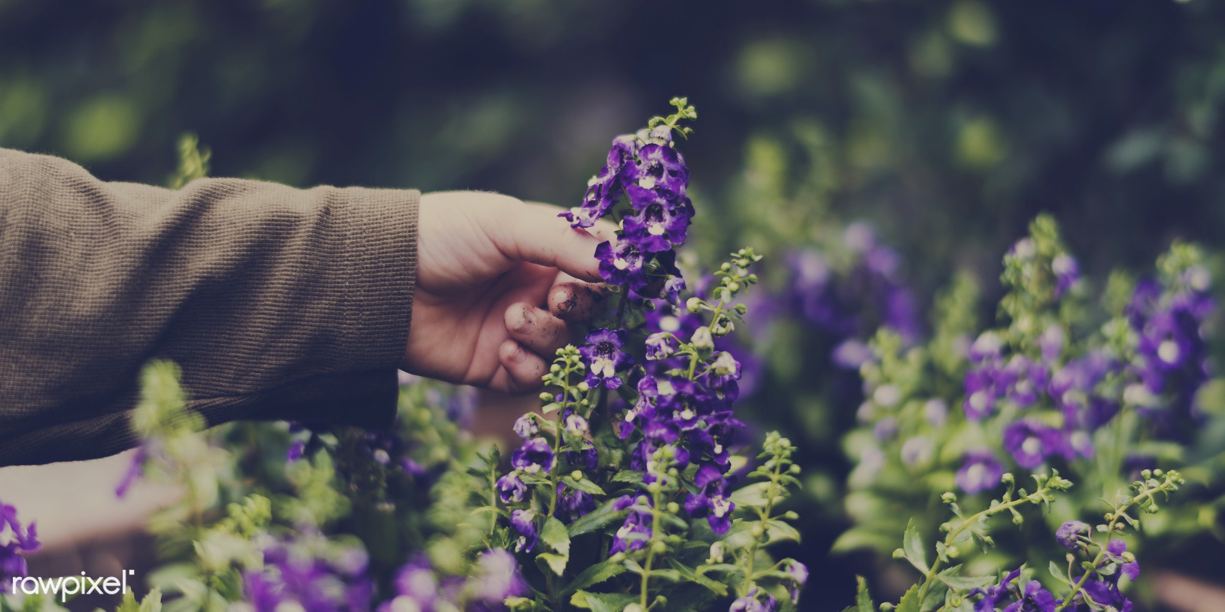 plant, relax, beauty, hand, nature, farmer, fresh, flower, activity, flora, hobby, agriculture, planting, leisure,...