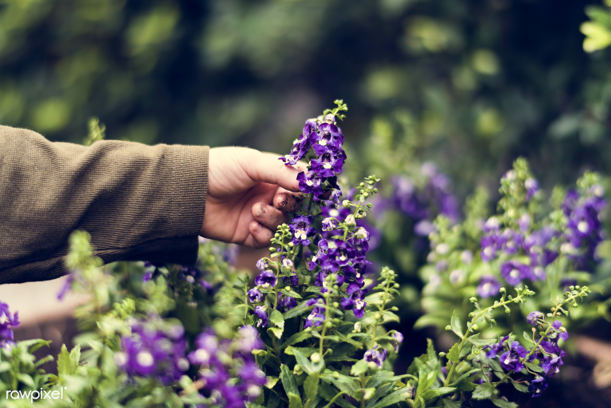 plant, relax, beauty, hand, farmer, nature, fresh, flower, activity, flora, hobby, agriculture, planting, leisure,...