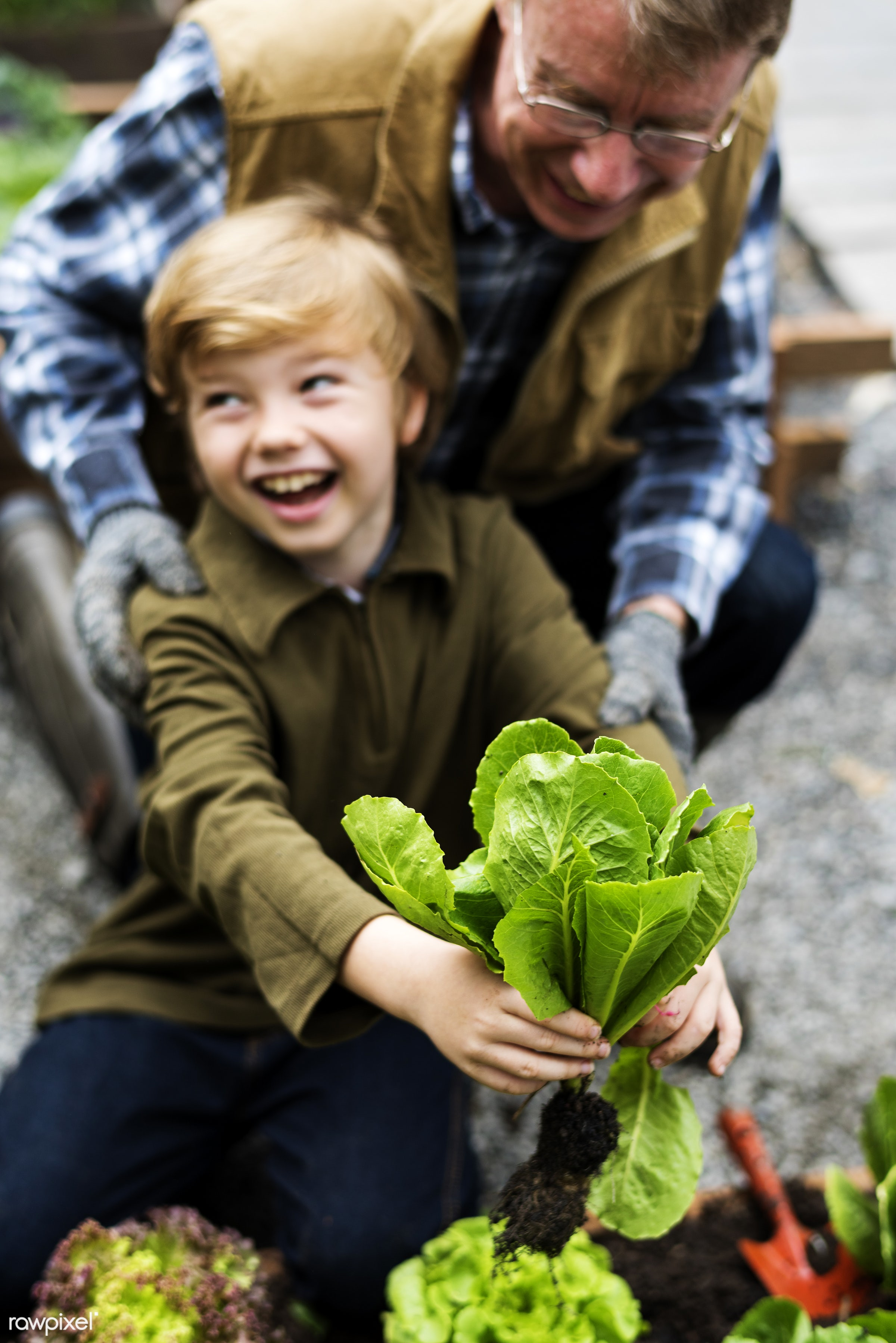 salad, person, pull, grandfather, leaves, people, kid, grandchild, farmer, grandson, dirt, agriculture, planting, present,...
