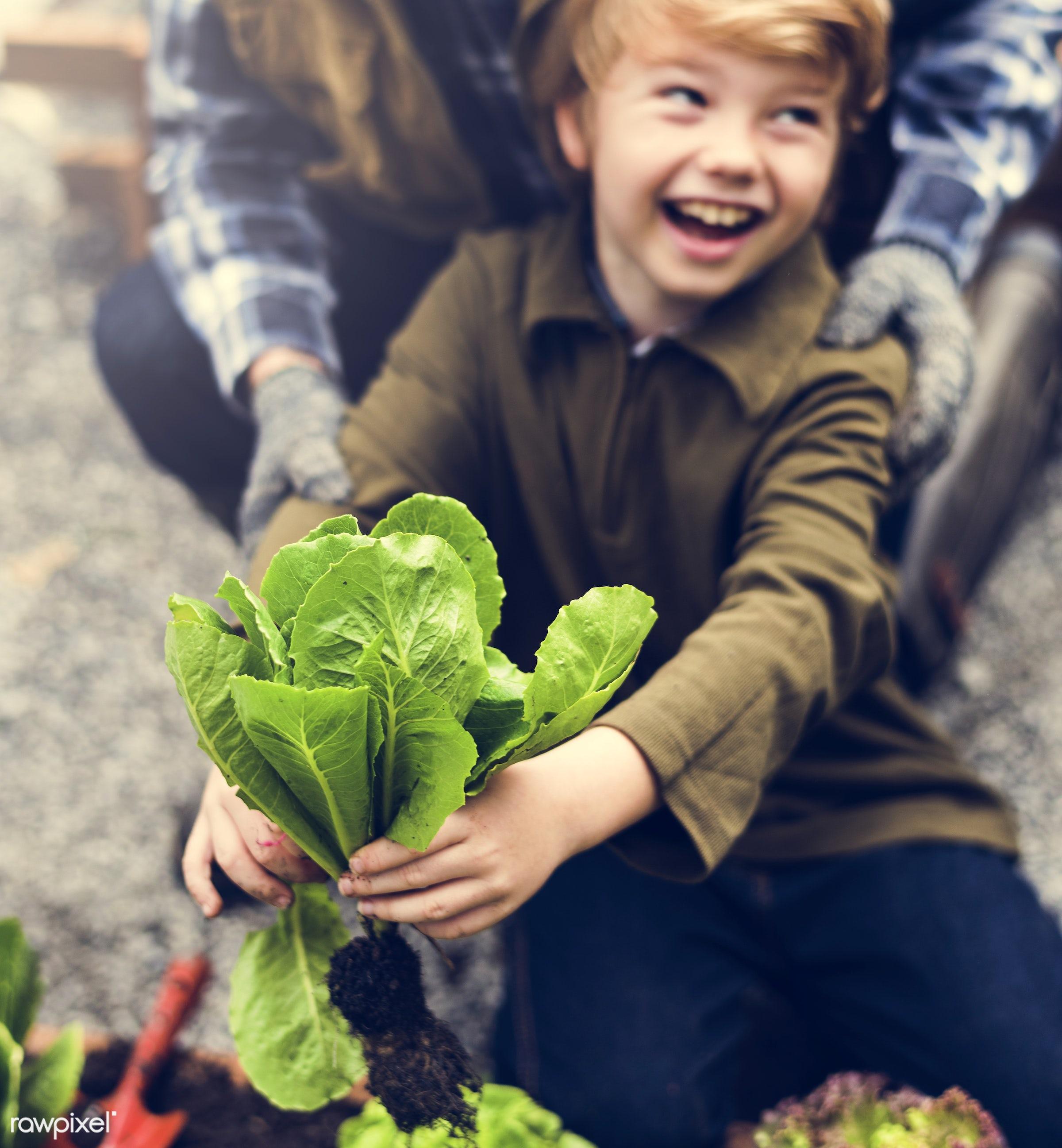 plant, carrot, nutritious, grandfather, basil, farmer, fresh, lettuce, family, healthy eating, smile, grandson, cheerful,...