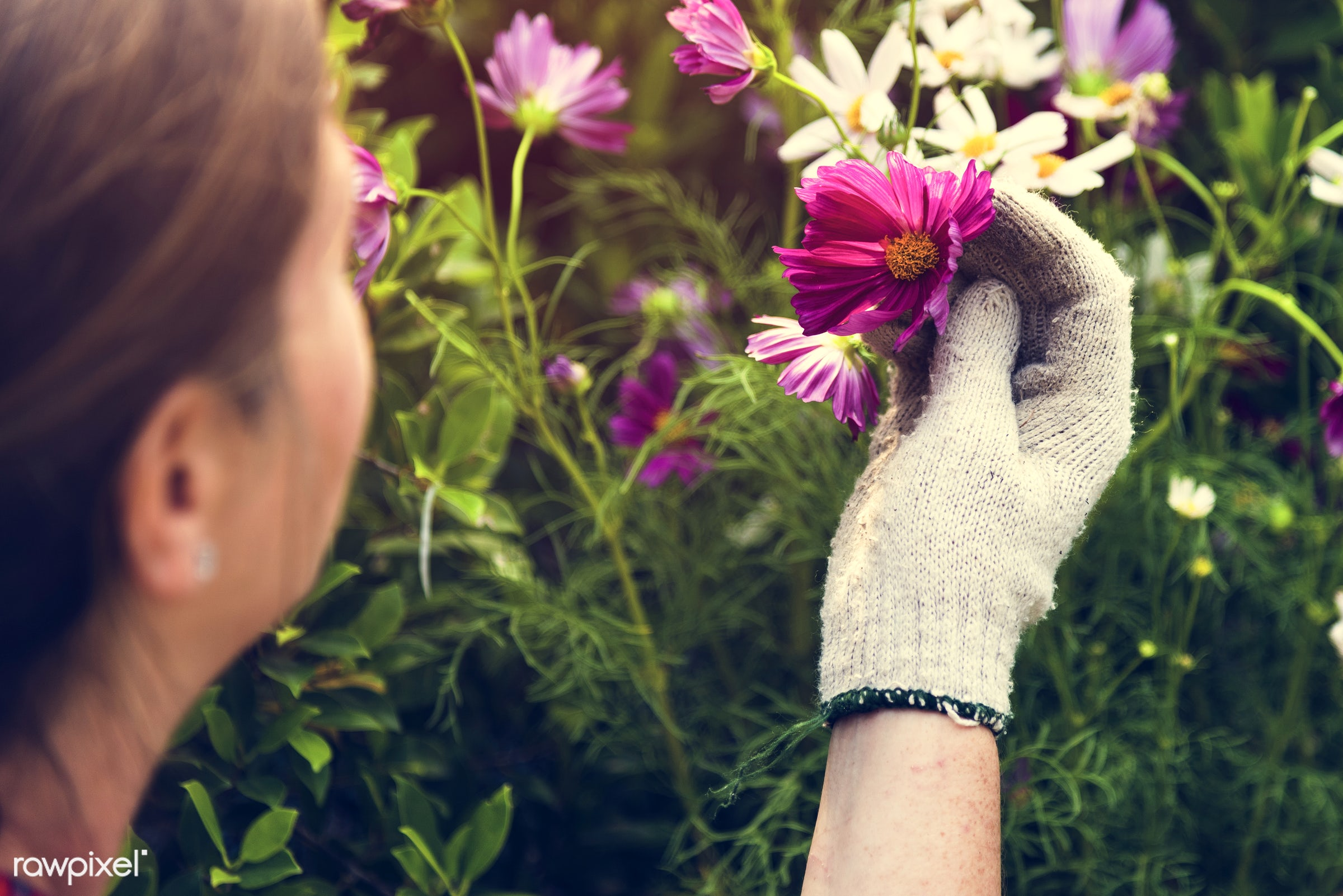 plant, relax, beauty, hand, nature, farmer, fresh, woman, activity, flower, flora, hobby, agriculture, planting, leisure,...