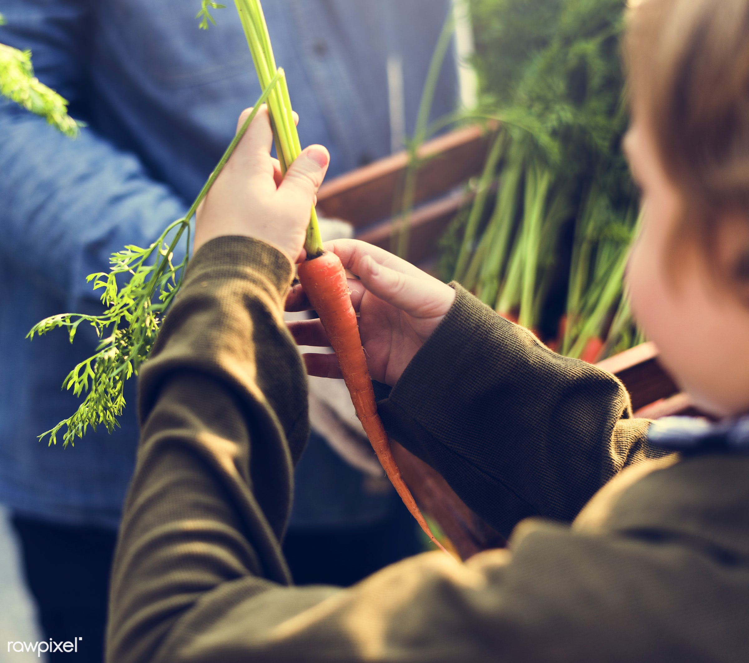 person, leaves, people, farmer, nature, lifestyle, ingredient, dirt, hold, agriculture, season, planting, kids, present,...