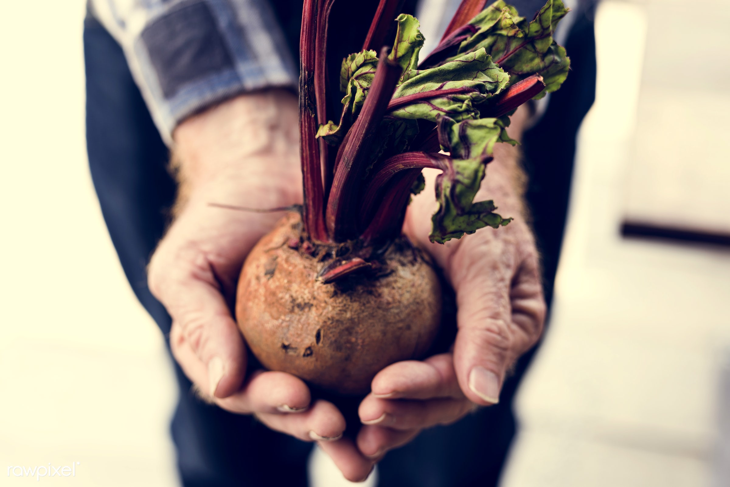 raw, plant, concept, botany, people, hand, nature, farmer, conservation, fresh, care, vegetarian, ecology, hold, season,...