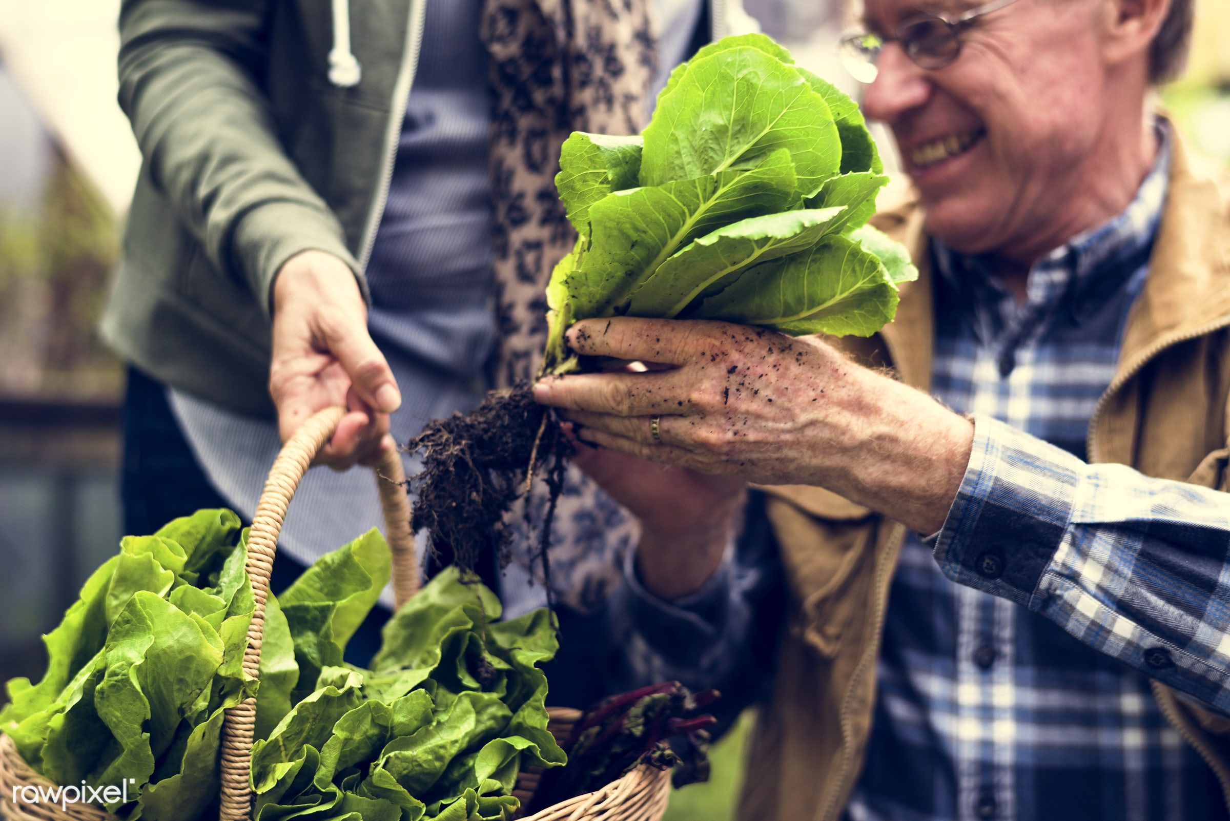plant, nutritious, farmer, fresh, family, lettuce, woman, healthy eating, couple, smile, cheerful, smiling, man, green,...