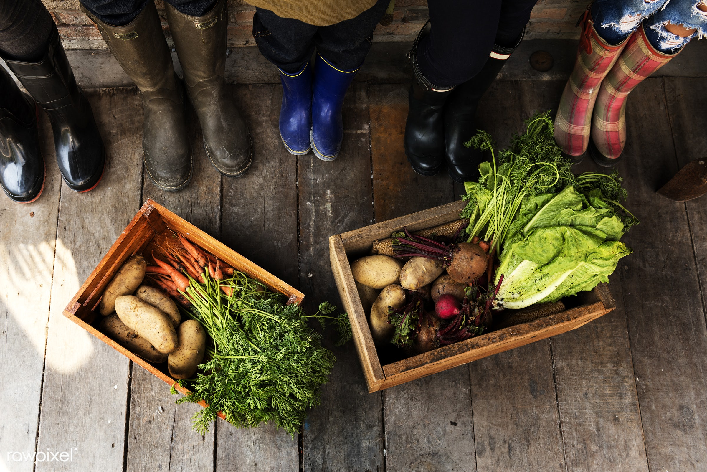 countryside, diverse, greenhouse, botanical, plantation, people, teamwork, friends, tree, nature, woman, lifestyle,...