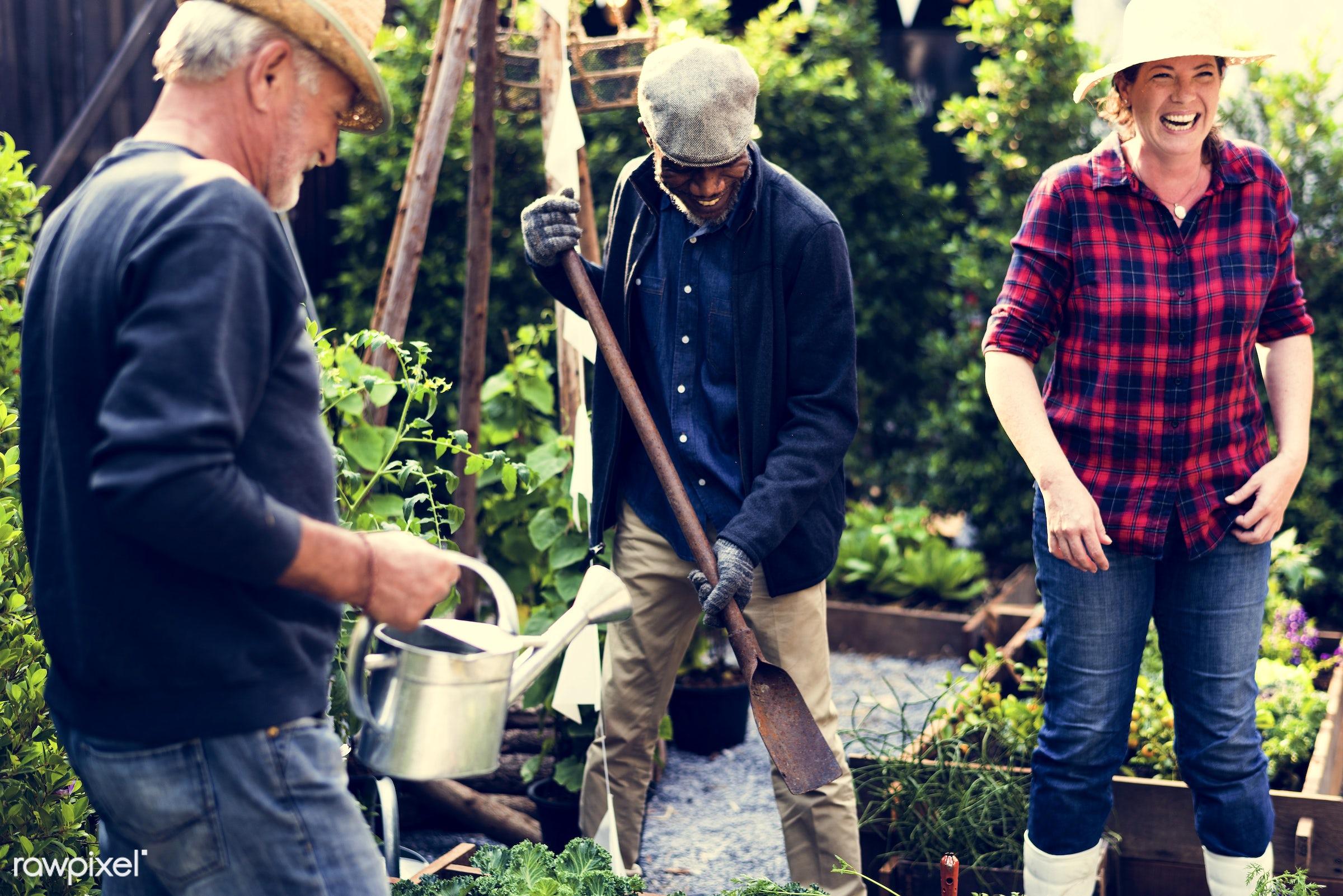 watering, plant, nutritious, greenhouse, friends, farmer, fresh, lettuce, healthy eating, friendship, men, flower, diversity...