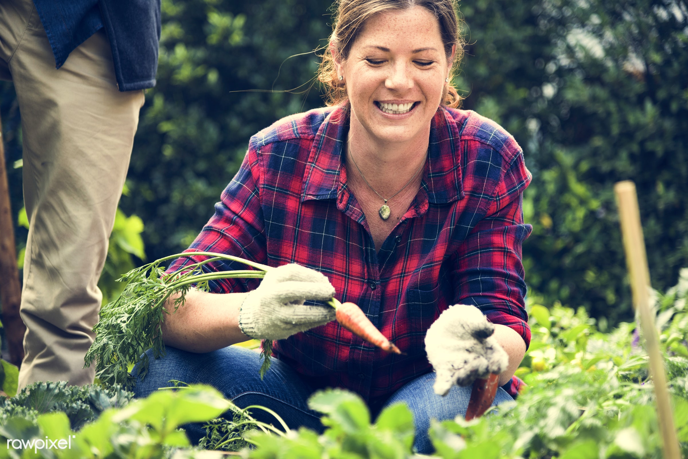 plant, carrot, tomato, nutritious, greenhouse, friends, farmer, fresh, lettuce, woman, healthy eating, friendship, smile,...