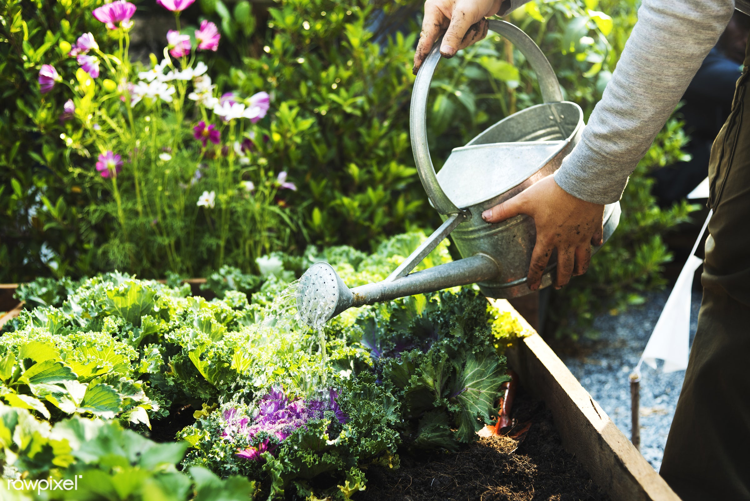 plant, salad, person, plants, leaves, spring, people, farm, hand, tree, farmer, hands, fresh, tree bed, dig, dirt, flowers,...