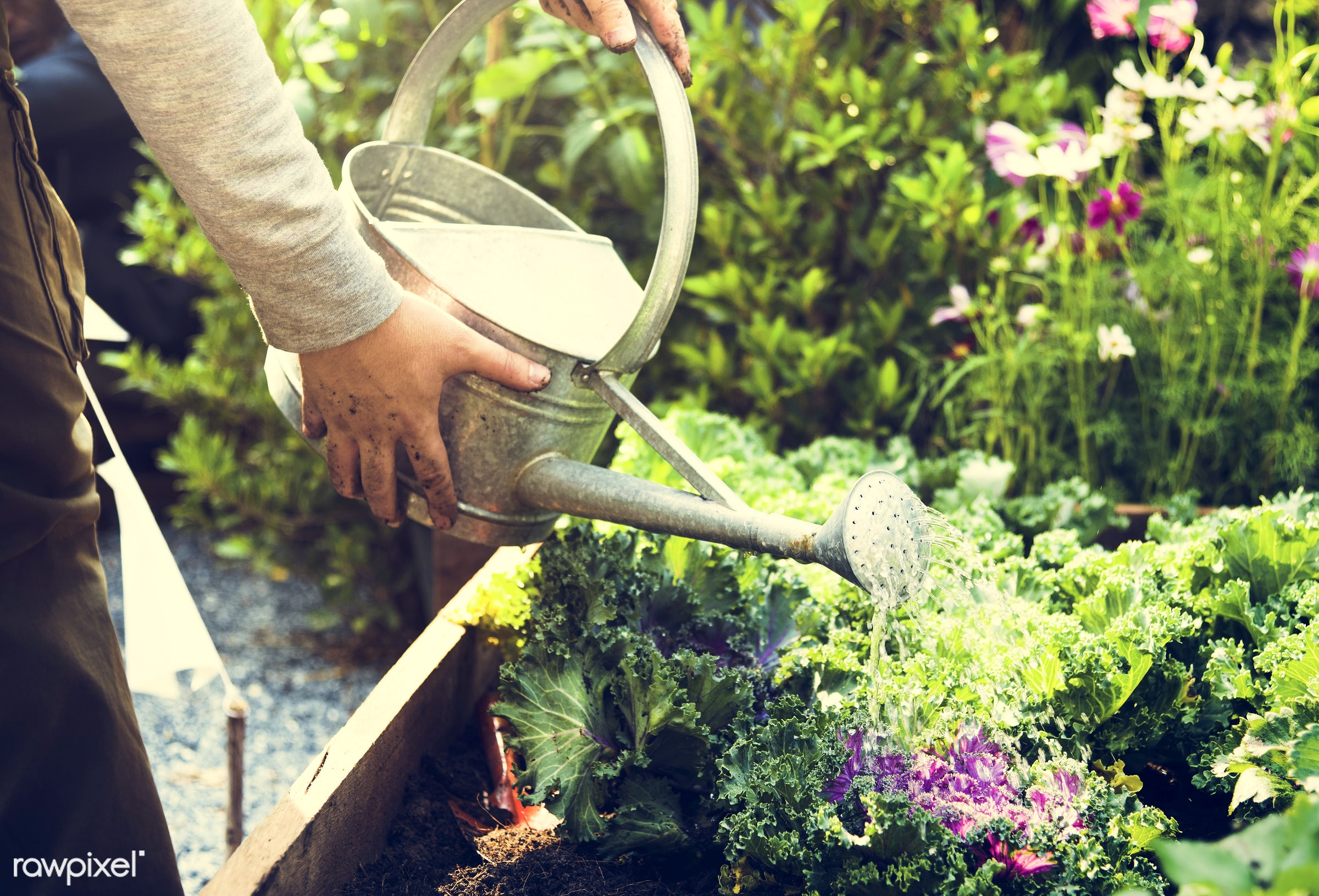 watering, plant, person, plants, leaves, people, farm, hand, tree, farmer, fresh, hands, dirt, wooden box, green, planting,...