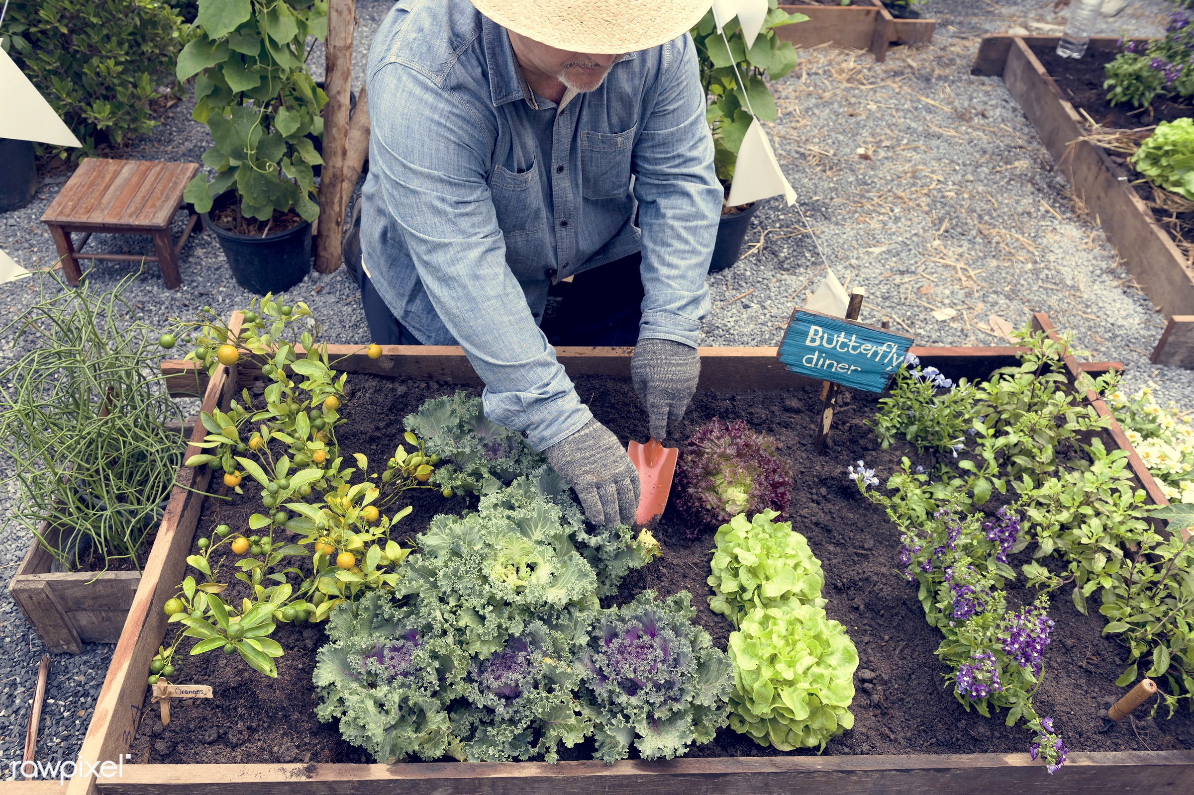 plant, nutritious, tomato, farmer, fresh, lettuce, healthy eating, flower, man, green, togetherness, agriculture, planting,...