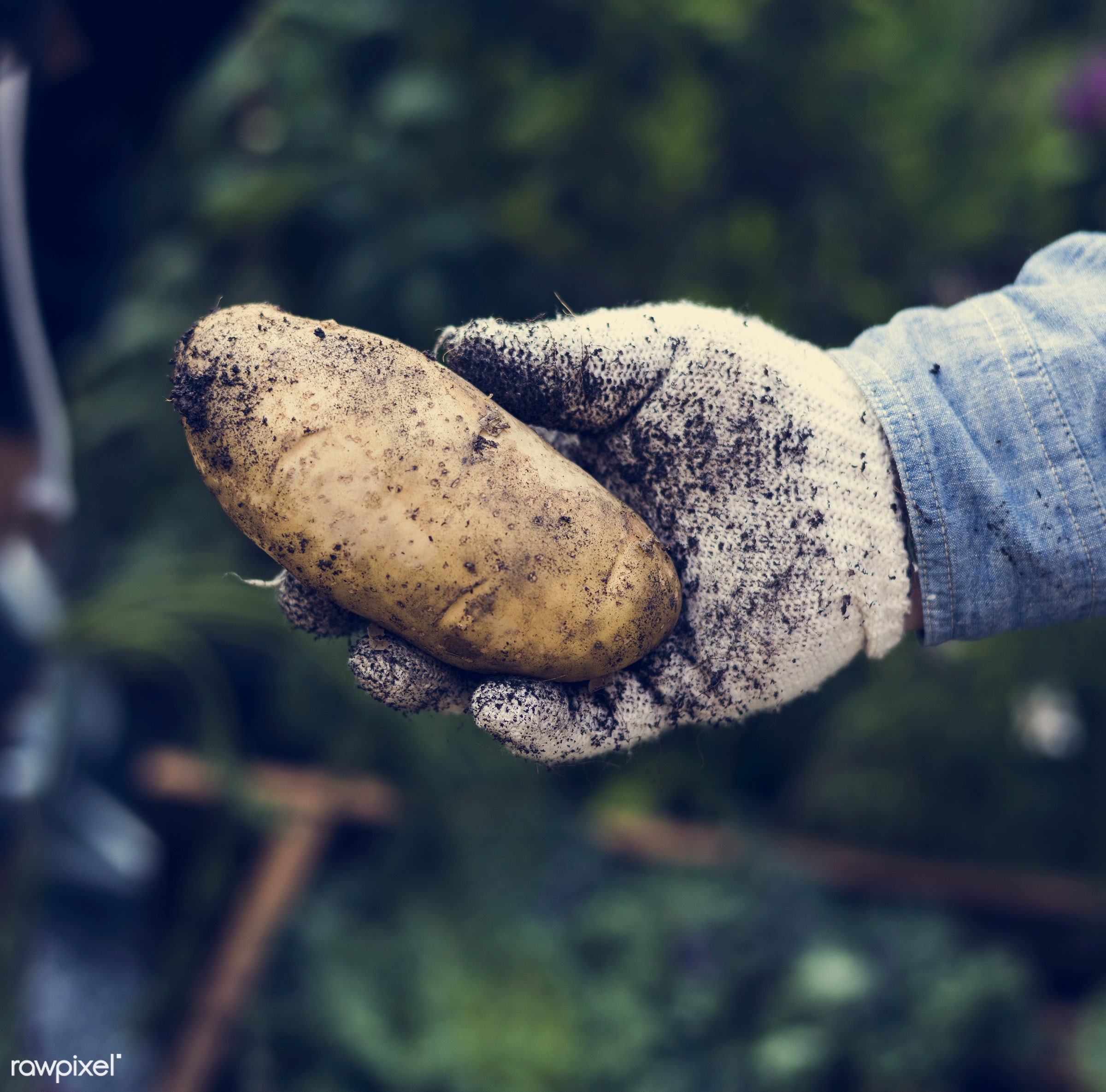 person, holding, show, people, crop, farmer, nature, cultivation, ingredient, dirt, hold, agriculture, present, nutrition,...