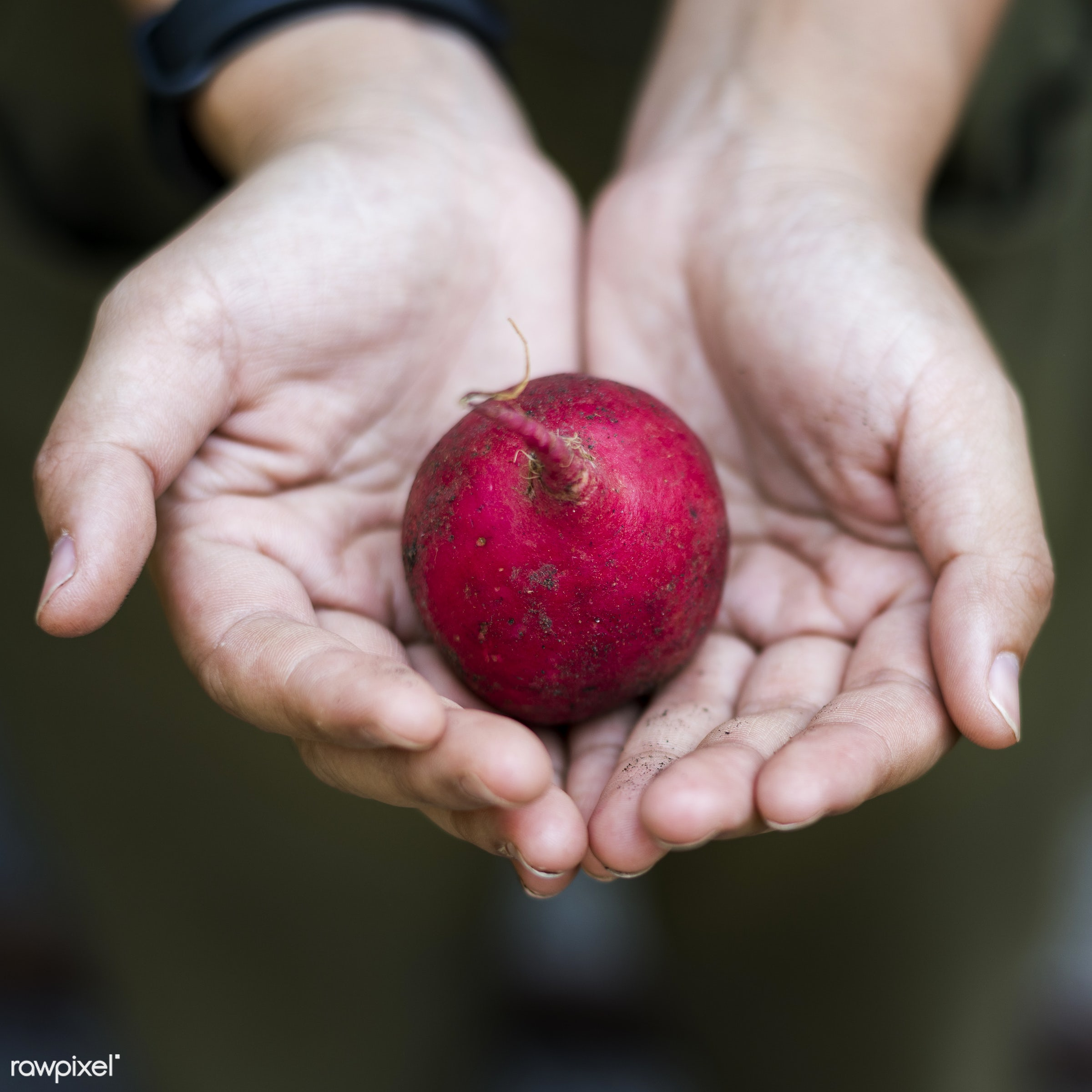 raw, plant, botany, people, hand, nature, farmer, conservation, fresh, vegetarian, ingredient, ecology, hold, season,...