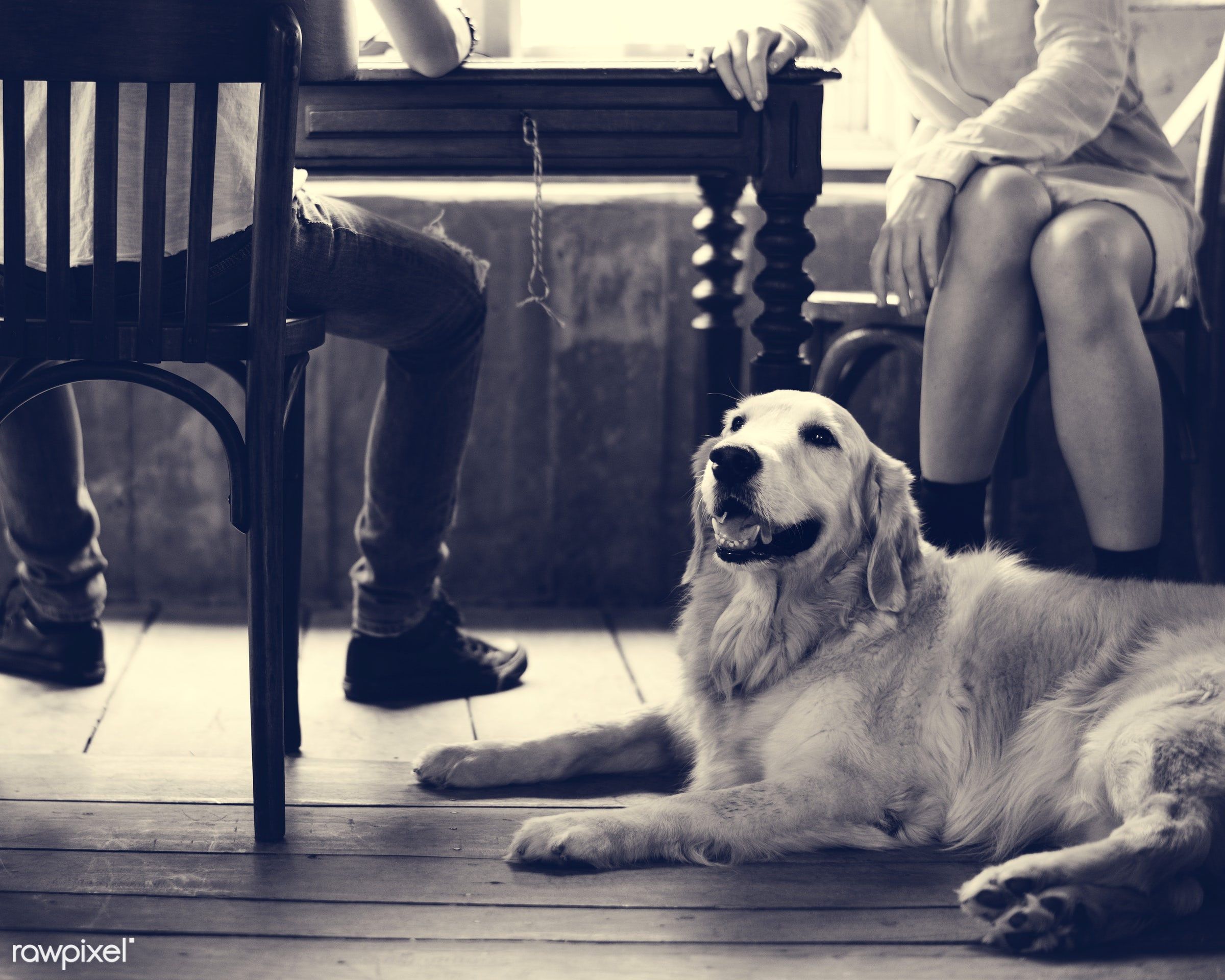 breed, person, relax, people, together, break, friends, woman, cheerful, hobby, leisure, canine, pastime, owner, adorable,...