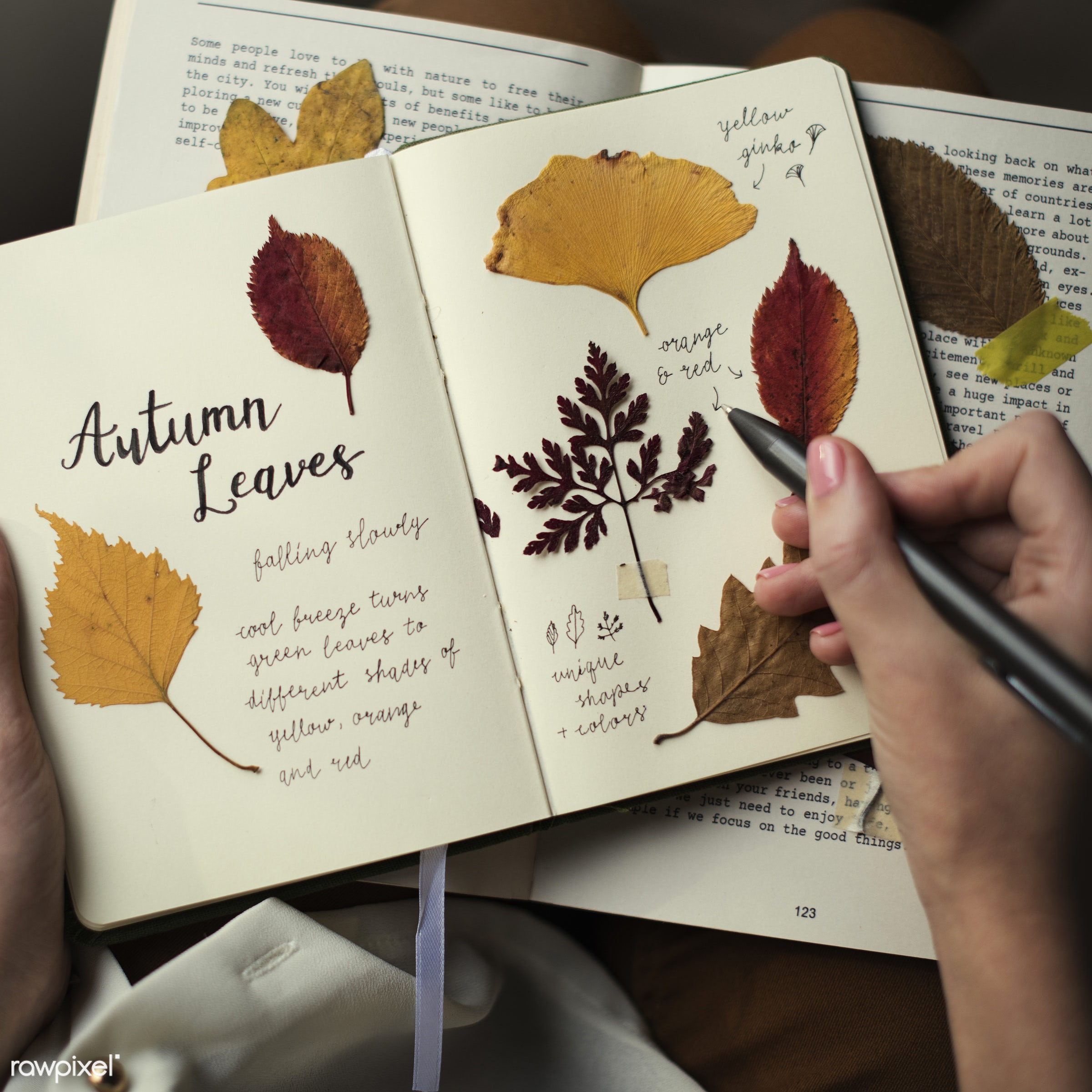 detail, relax, handicraft, leaf, leaves, people, decor, break, dried, nature, woman, flowers, work, hold, refreshment, hobby...