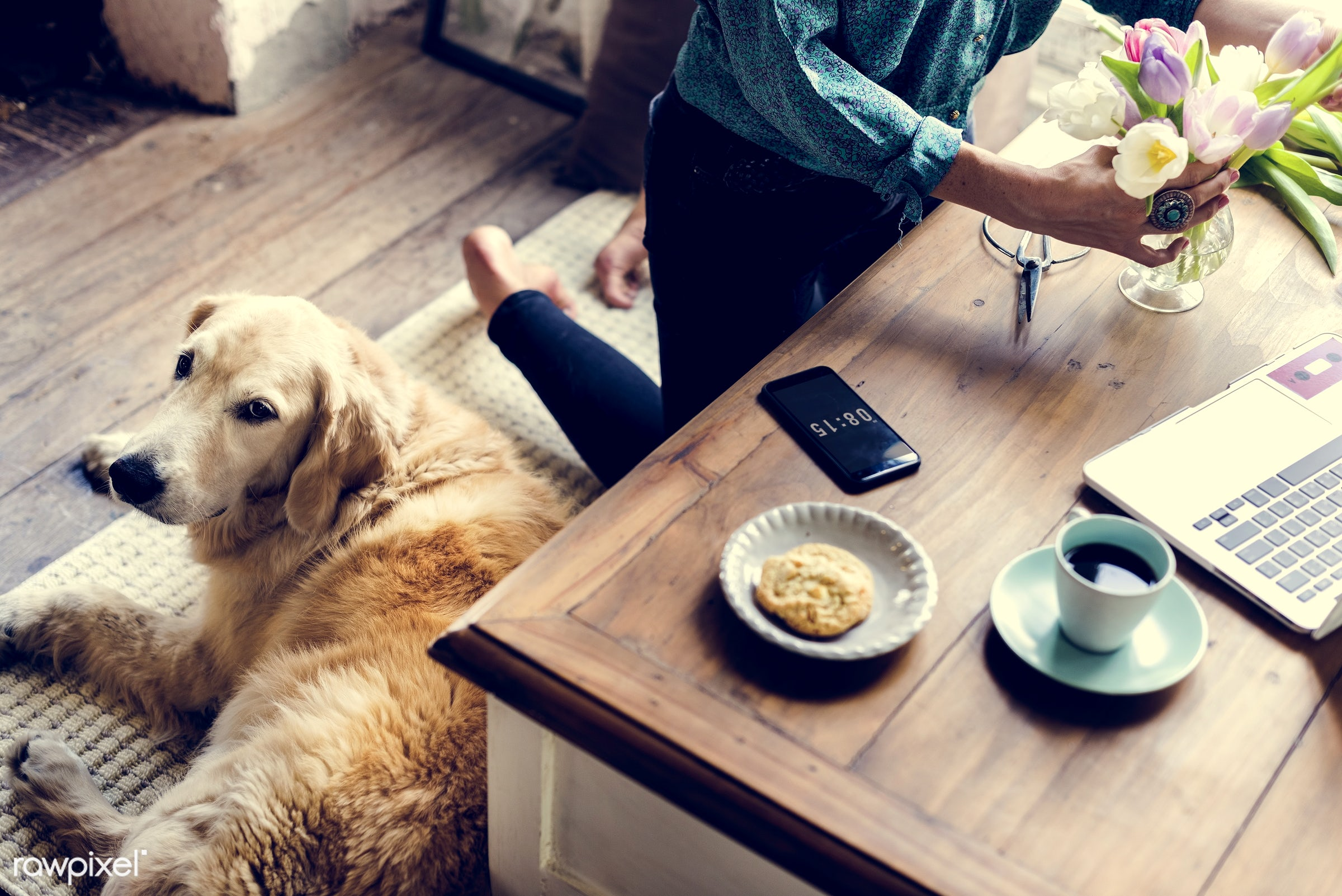 breed, using, person, relax, people, woman, laptop, working, flowers, surf, cheerful, work, coffee, table, canine, present,...