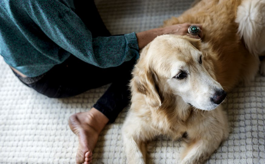 Woman Petting Goldent Retriever Dog