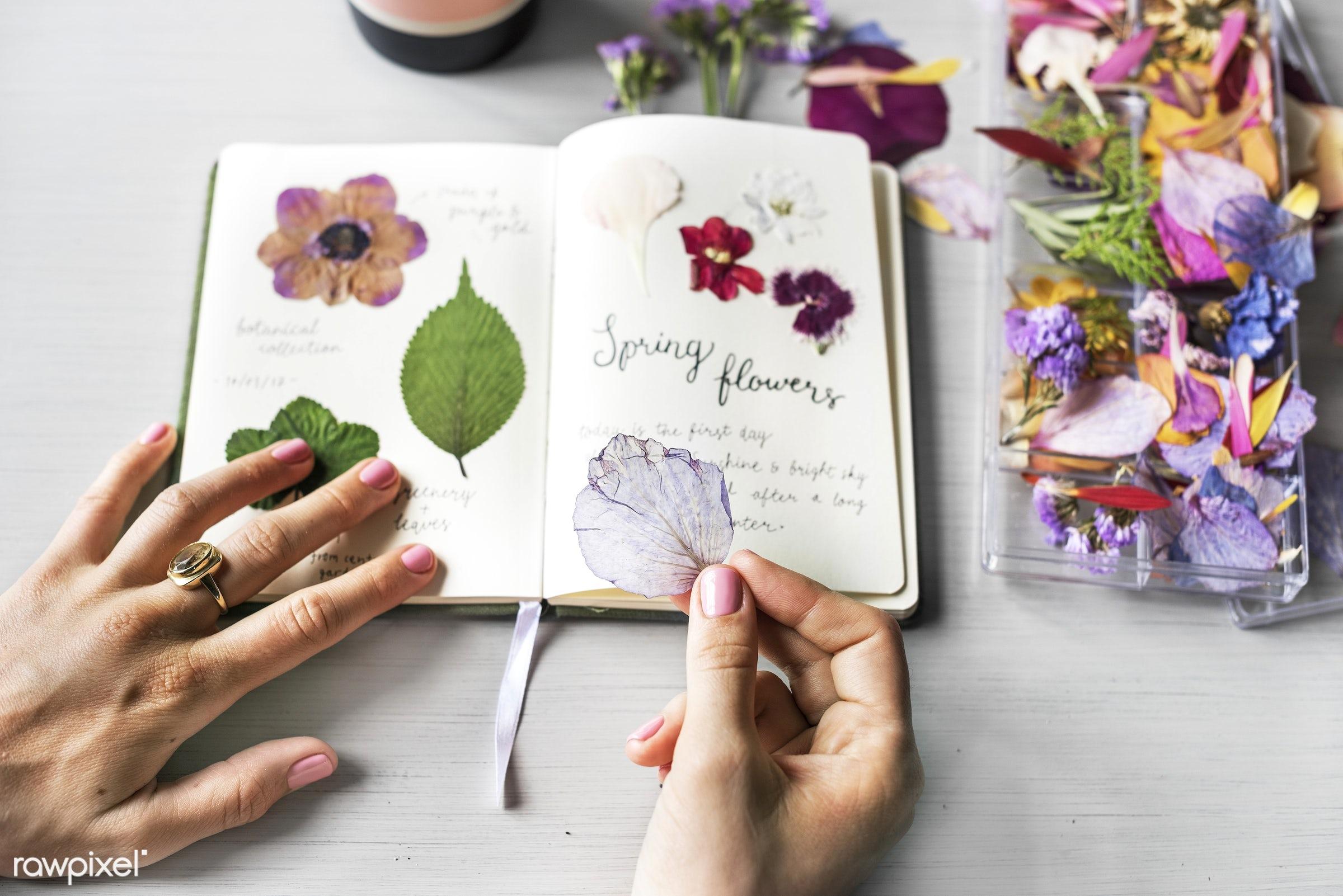 old, diary, decorative, botany, set, album, plants, botanic, collection, leaf, romance, spring, nature, fresh, flower, wild...