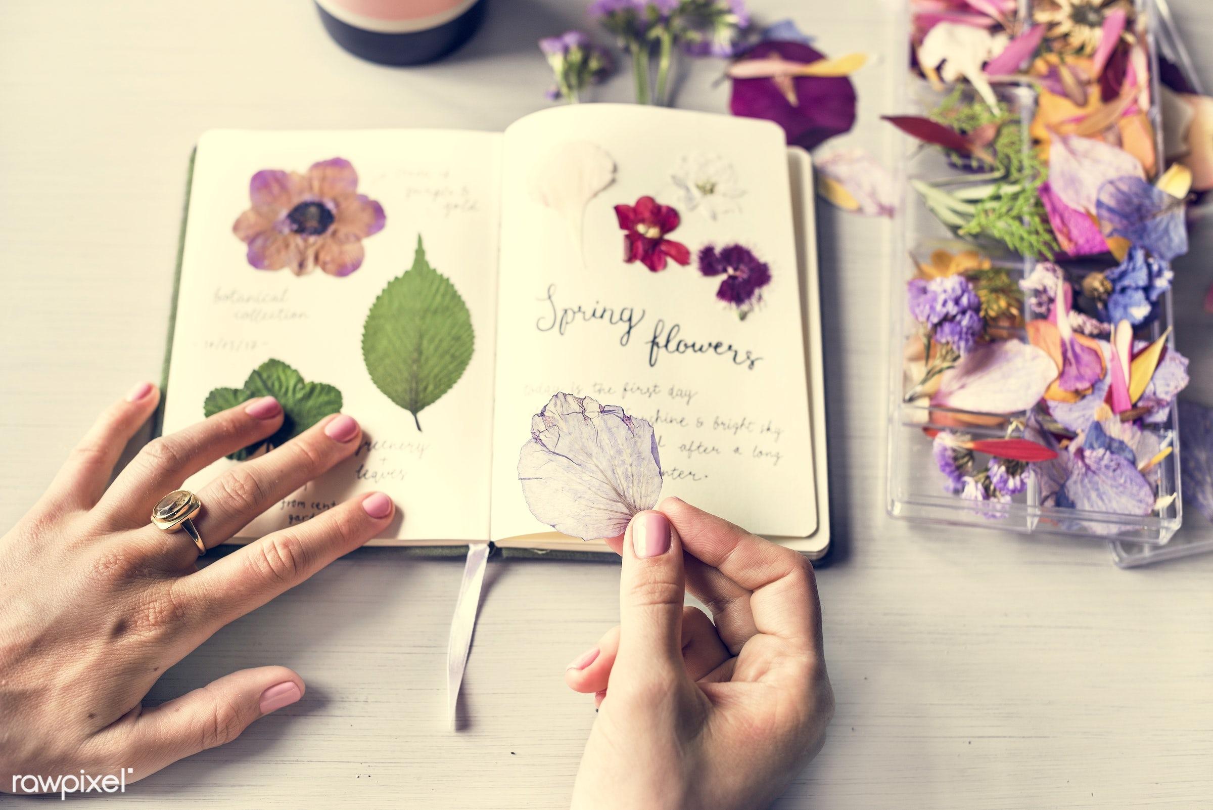 old, diary, decorative, botany, set, album, plants, botanic, collection, leaf, spring, romance, nature, fresh, flower, wild...