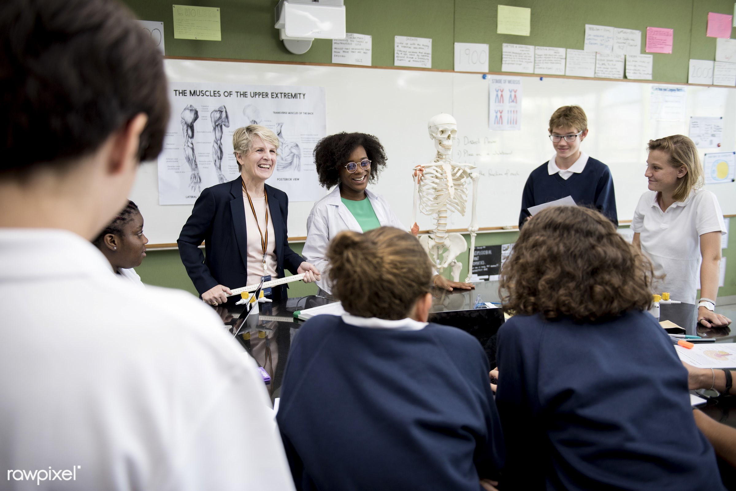 person, discussion, knowledge, diverse, study, skeleton, people, together, young adult, anatomy, bones, men, biology,...