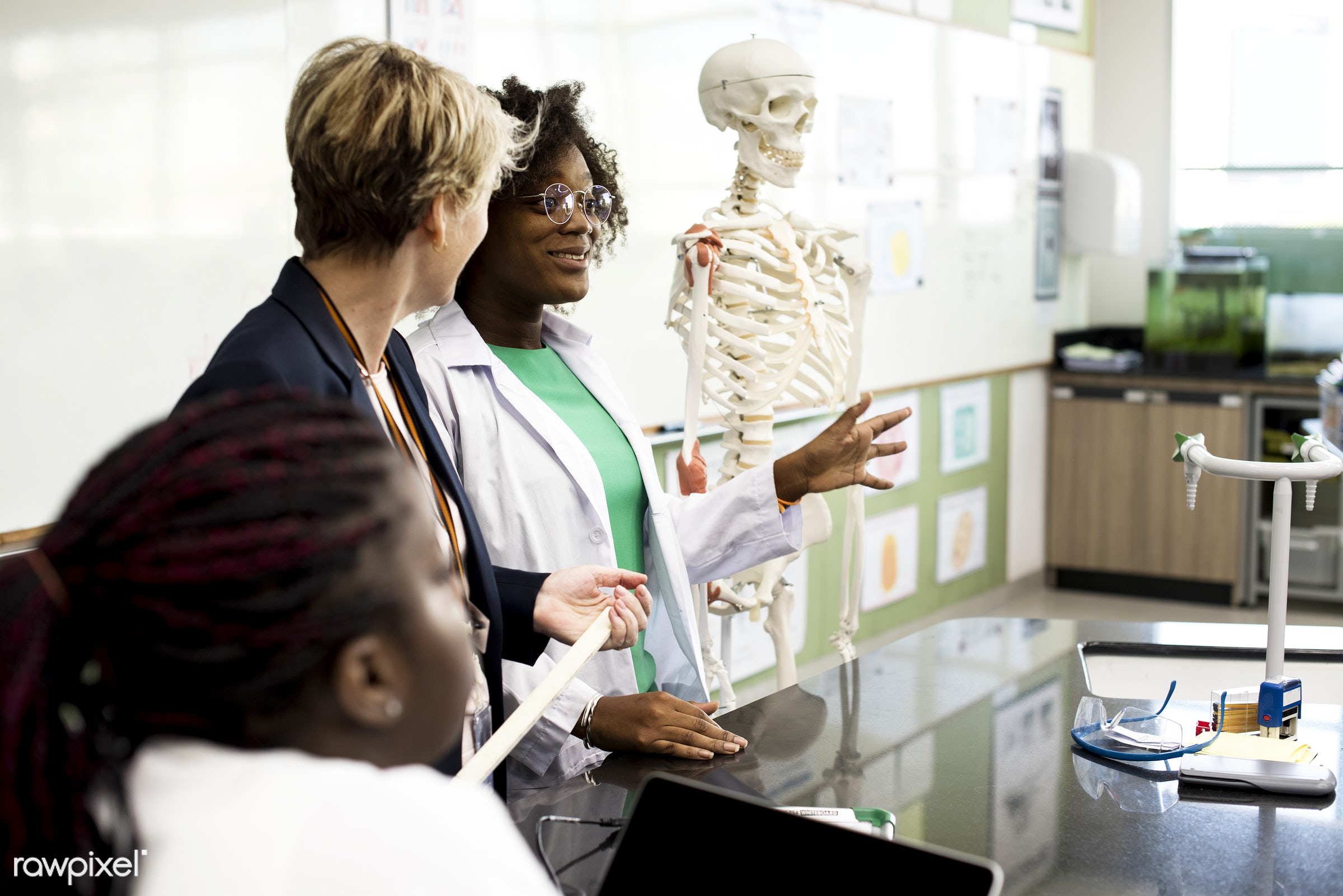 knowledge, diverse, paper, study, skeleton, young adult, anatomy, bones, gown, eyeglasses, biology, students, structure,...