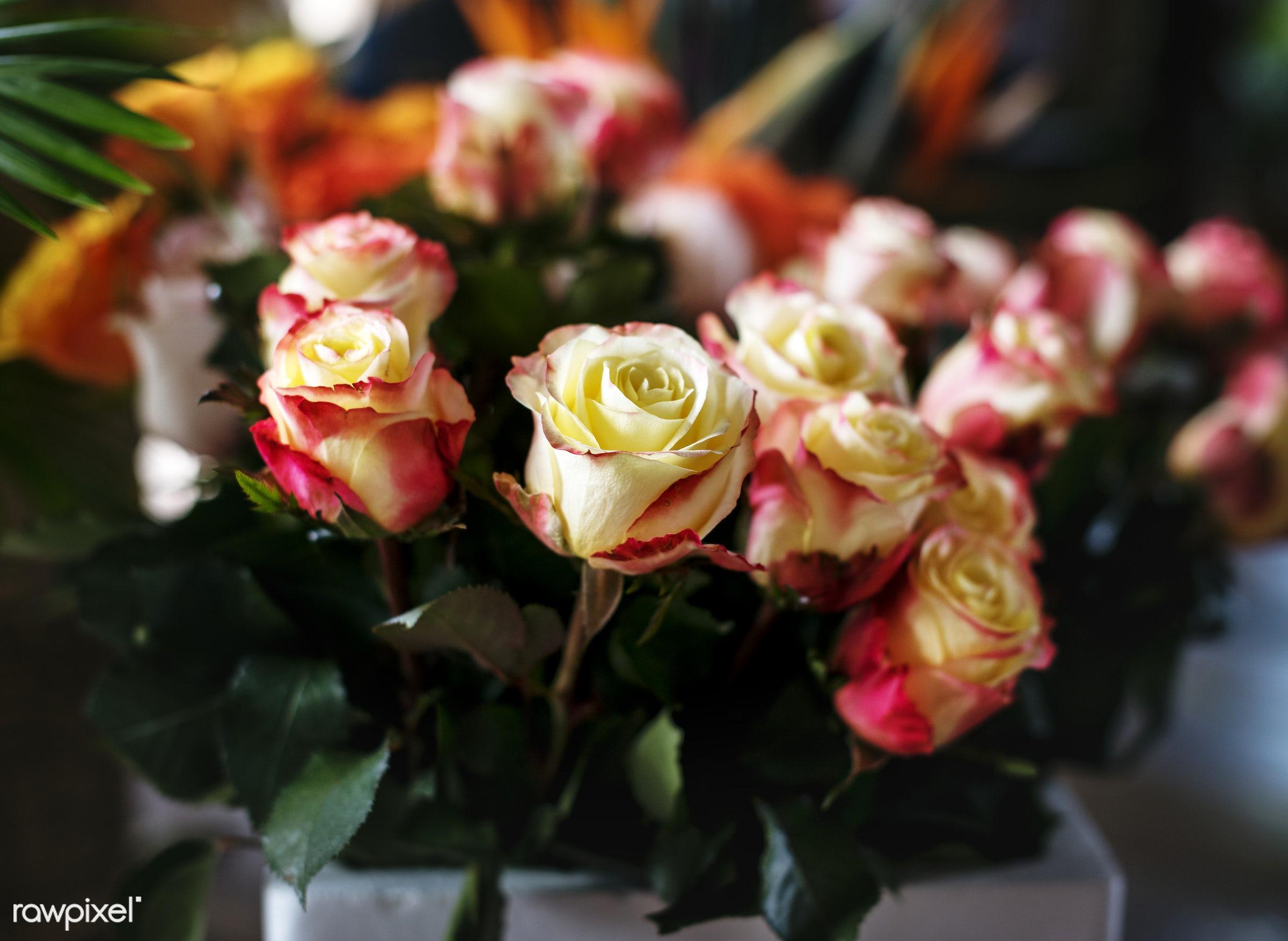 plant, bouquet, shop, concept, decorative, botany, leaf, botanical, romance, blossom, decor, fresh, foliage, bunch, flowers...