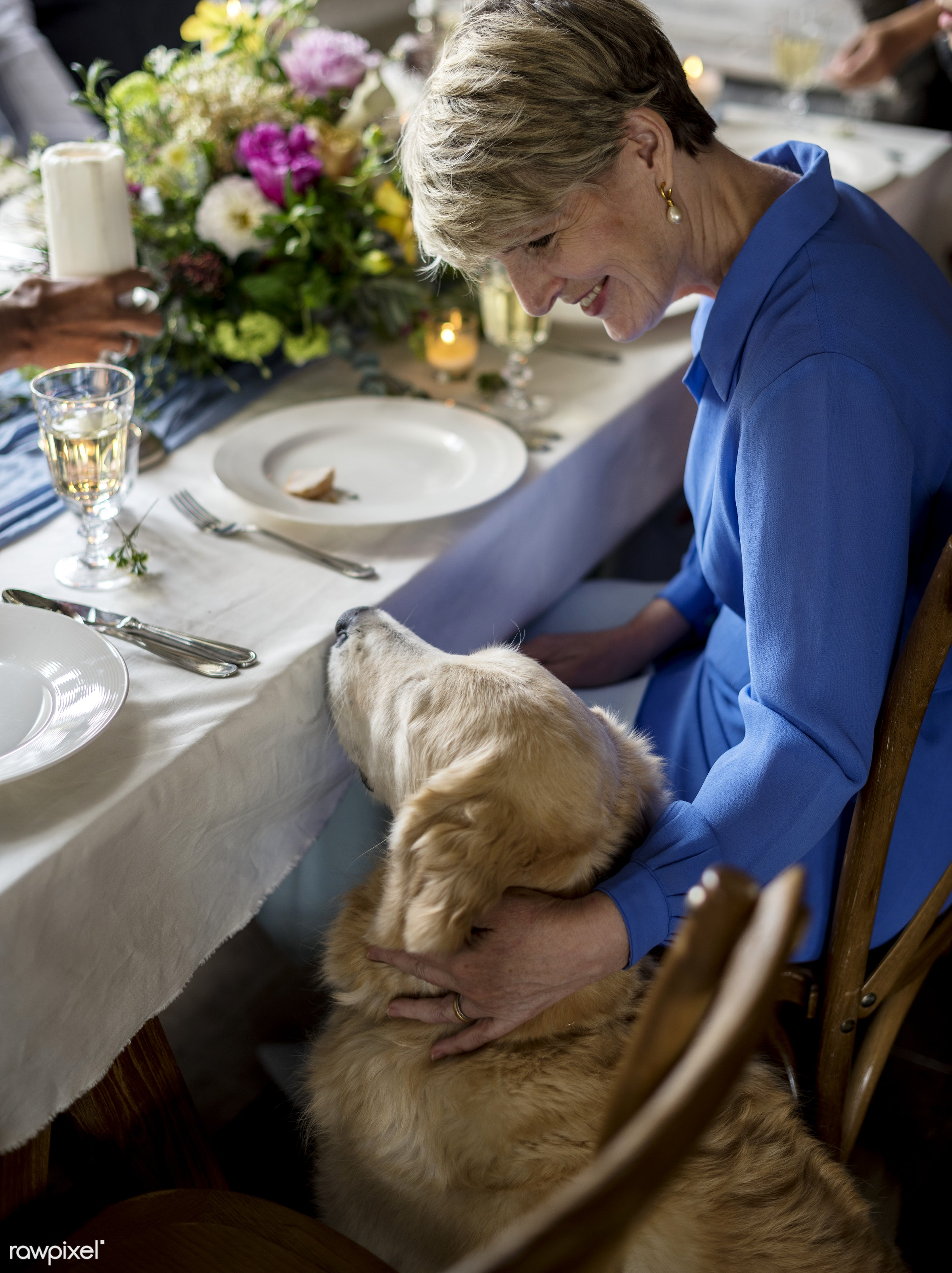 person, begging, party, together, caucasian, retirement, woman, celebrate, closeup, animal, waiting, table, ceremony, senior...