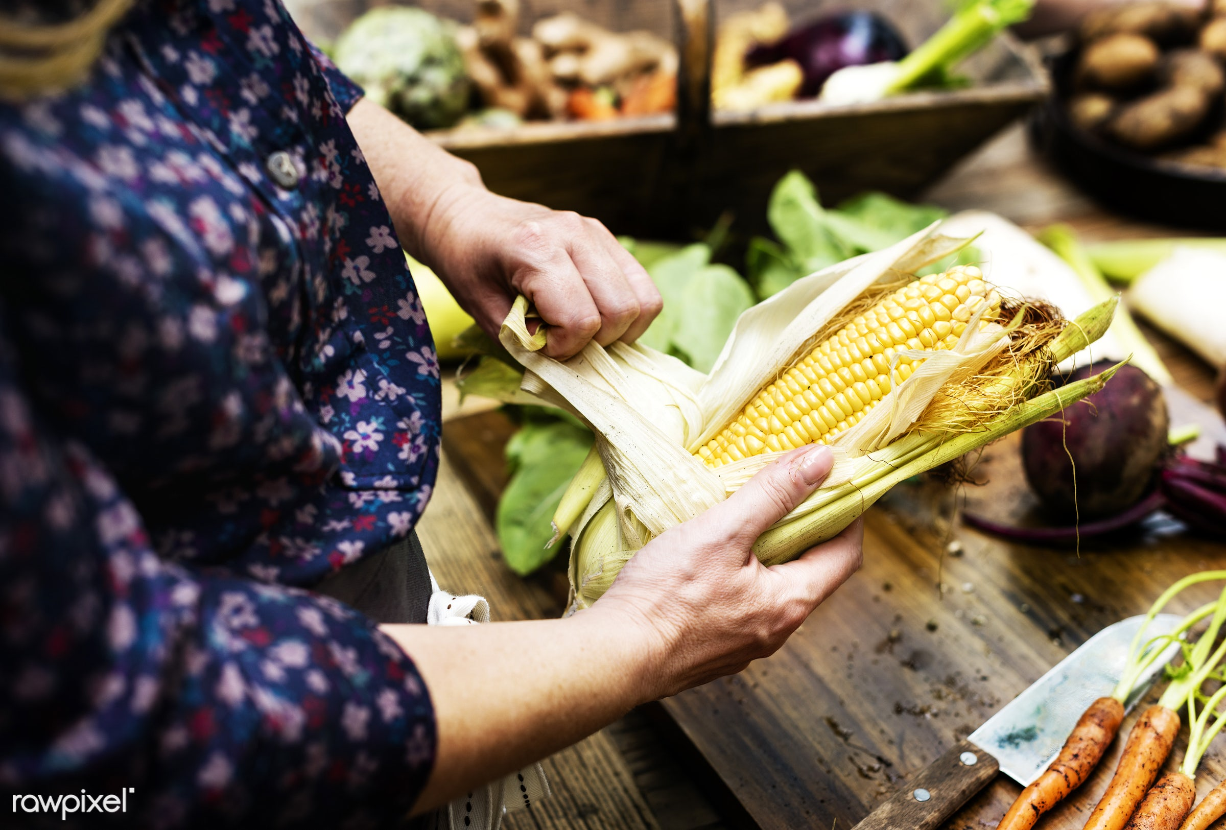raw, diverse, buy, maize, corn, farm, ingredients, farmer, nature, hands, fresh, choosing, products, closeup, agriculture,...