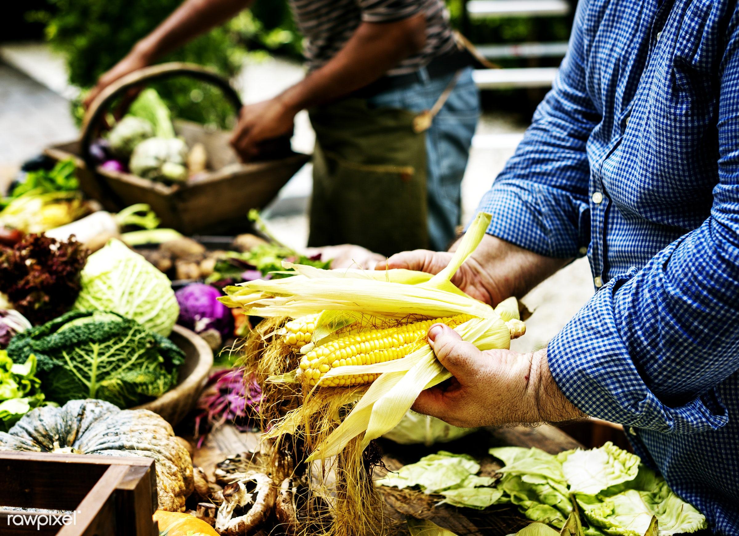 raw, buy, diverse, herbs, caucasian, ingredients, farm, nature, farmer, sell, fresh, hands, products, closeup, corns,...