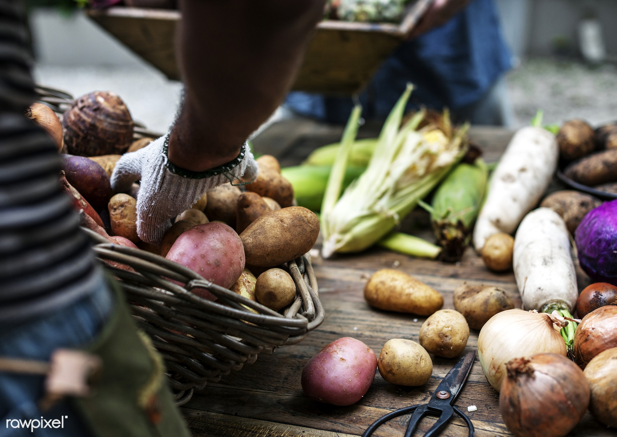 raw, diverse, herbs, potatoes, farm, ingredients, farmer, nature, fresh, hands, products, closeup, agriculture, variety,...