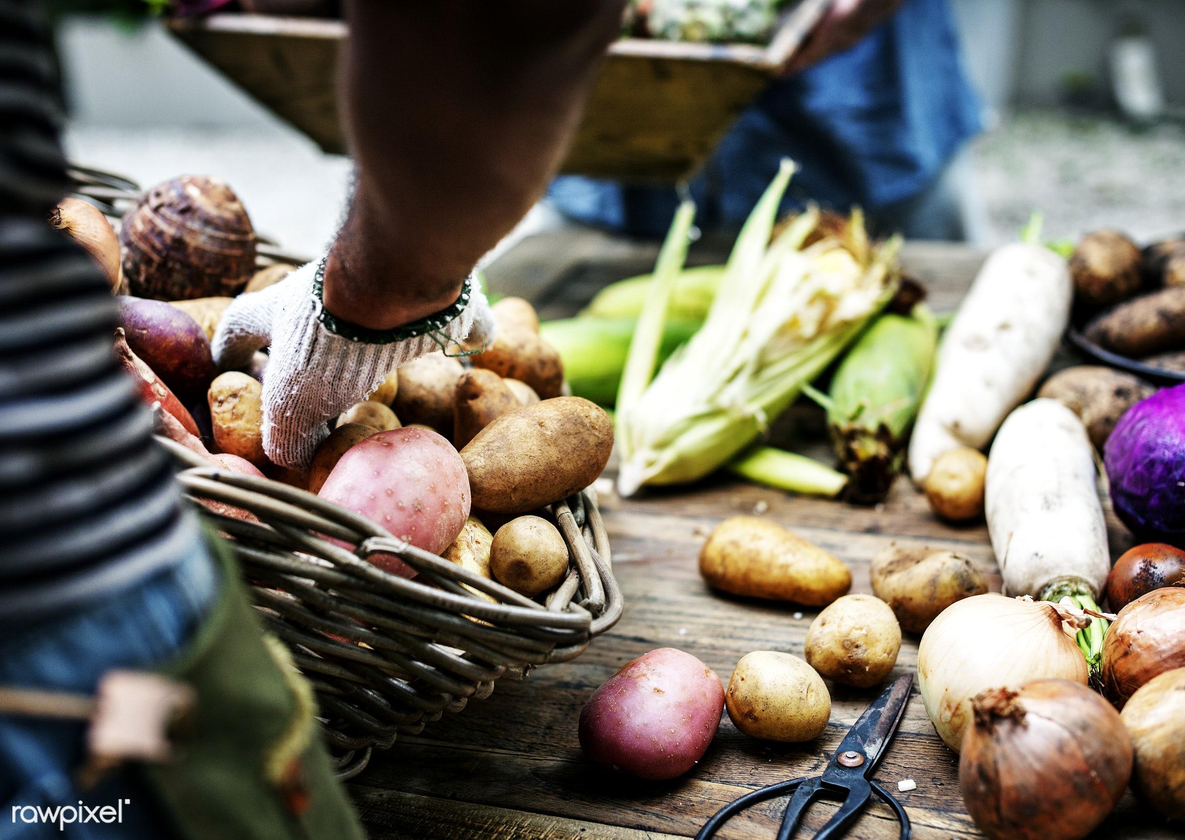 A person arranging potatoes at a stall  - raw, diverse, herbs, potatoes, farm, ingredients, farmer, nature, fresh, hands,...