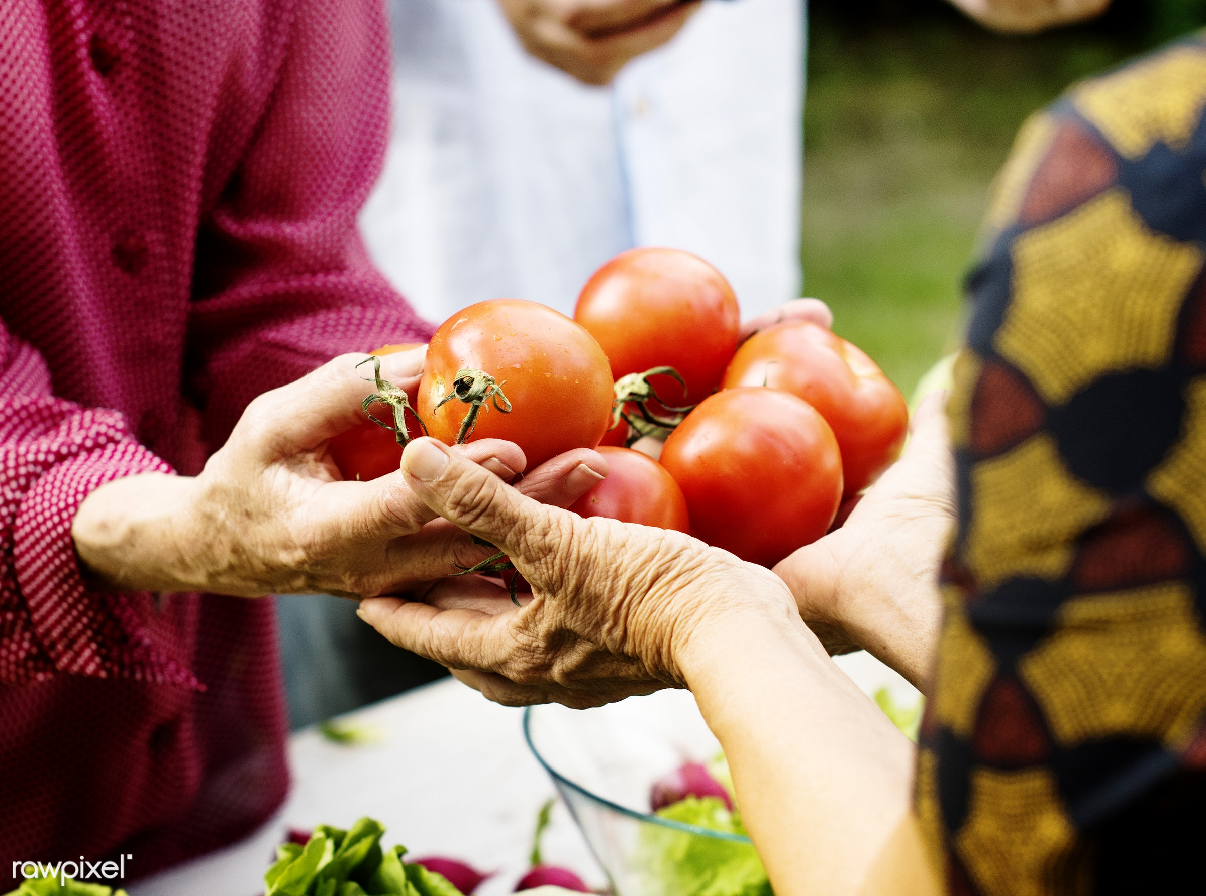 Fresh tomatoes - raw, tomato, holding, kind, nature, hands, fresh, ingredient, closeup, green, culinary, veggies, edible,...