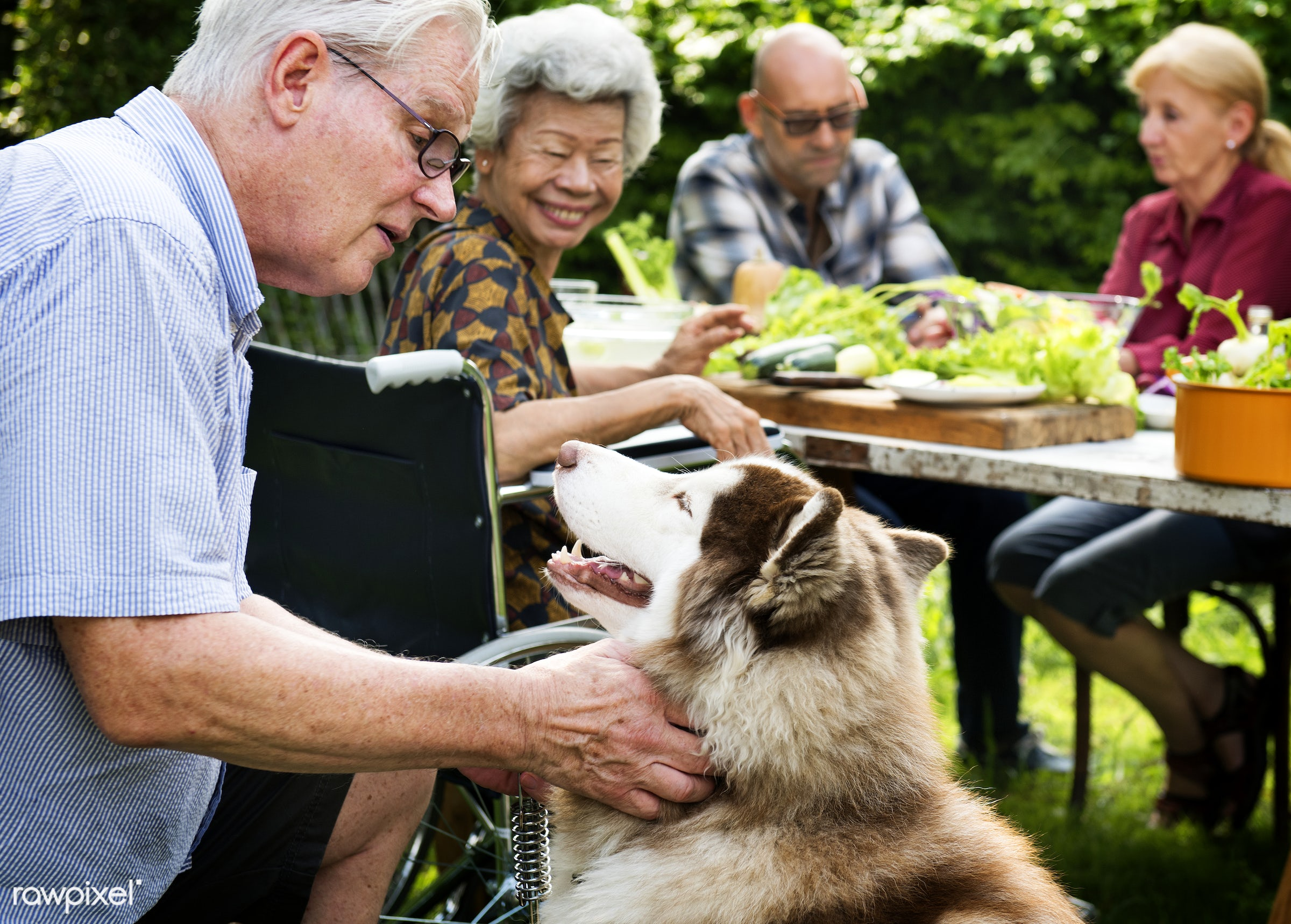 Senior man playing with siberian huskey - diverse, party, people, together, playing, friends, nature, wheelchair, fresh,...