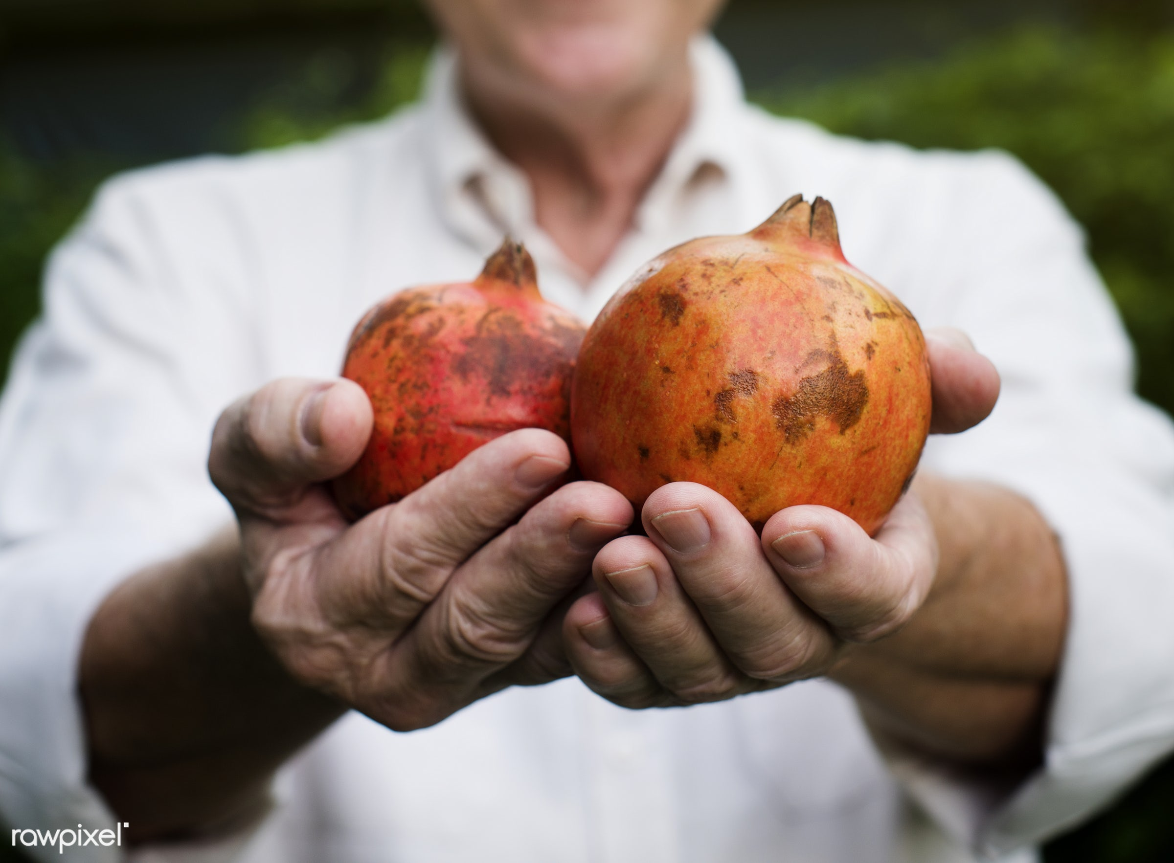 raw, pomegranate, holding, farm, nature, hands, fresh, closeup, fruit, organic, healthy, harvest, produce