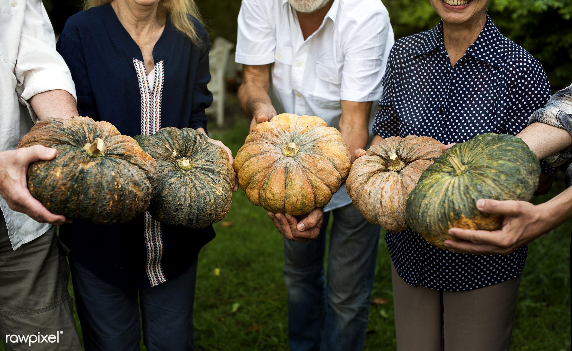 plant, raw, cuisine, diverse, people, crop, hands, fresh, woman, pick, cultivation, ingredient, man, pumpkin, agriculture,...