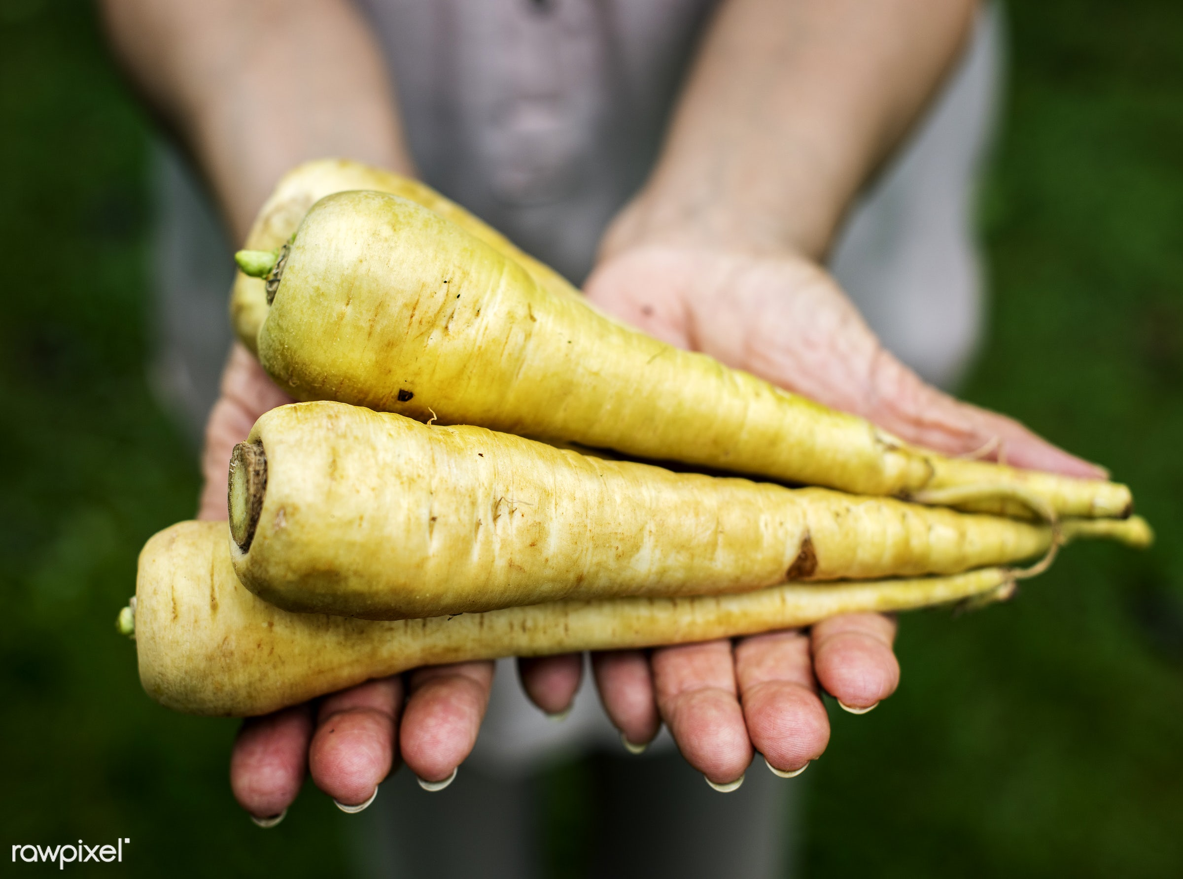 plant, raw, cuisine, carrot, crop, hands, fresh, cultivation, pick, ingredient, agriculture, farming, product, organic,...