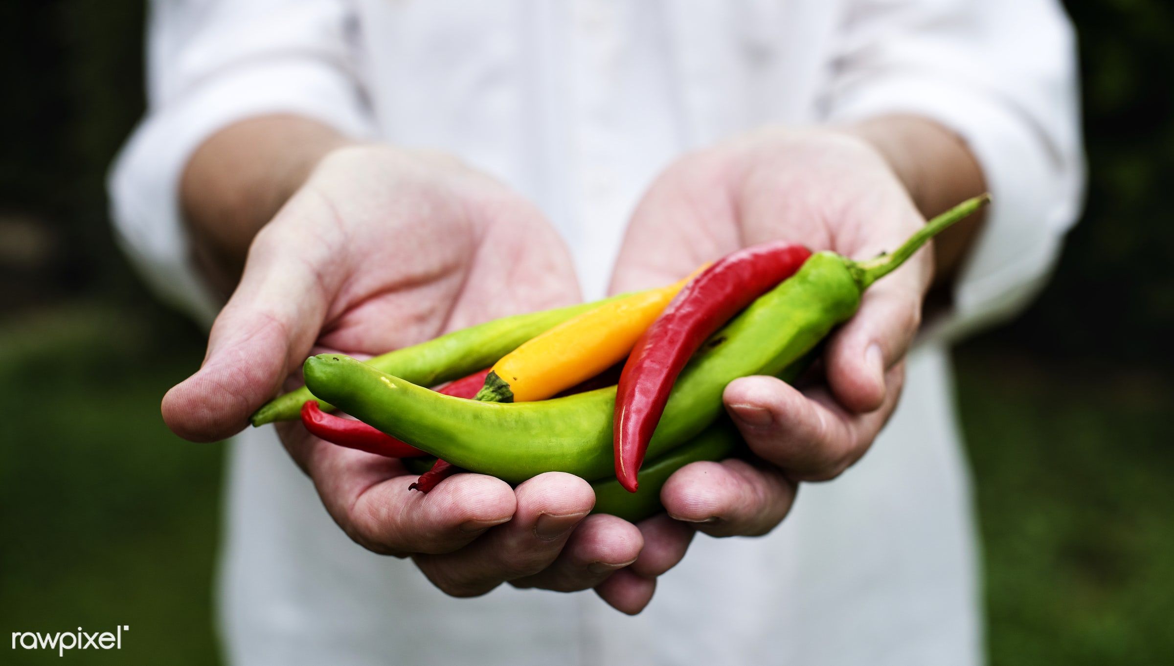 cayenne, holding, spice, nature, hands, chilli, closeup, mexican, chili, organic, food, healthy, harvest, vegetable, produce