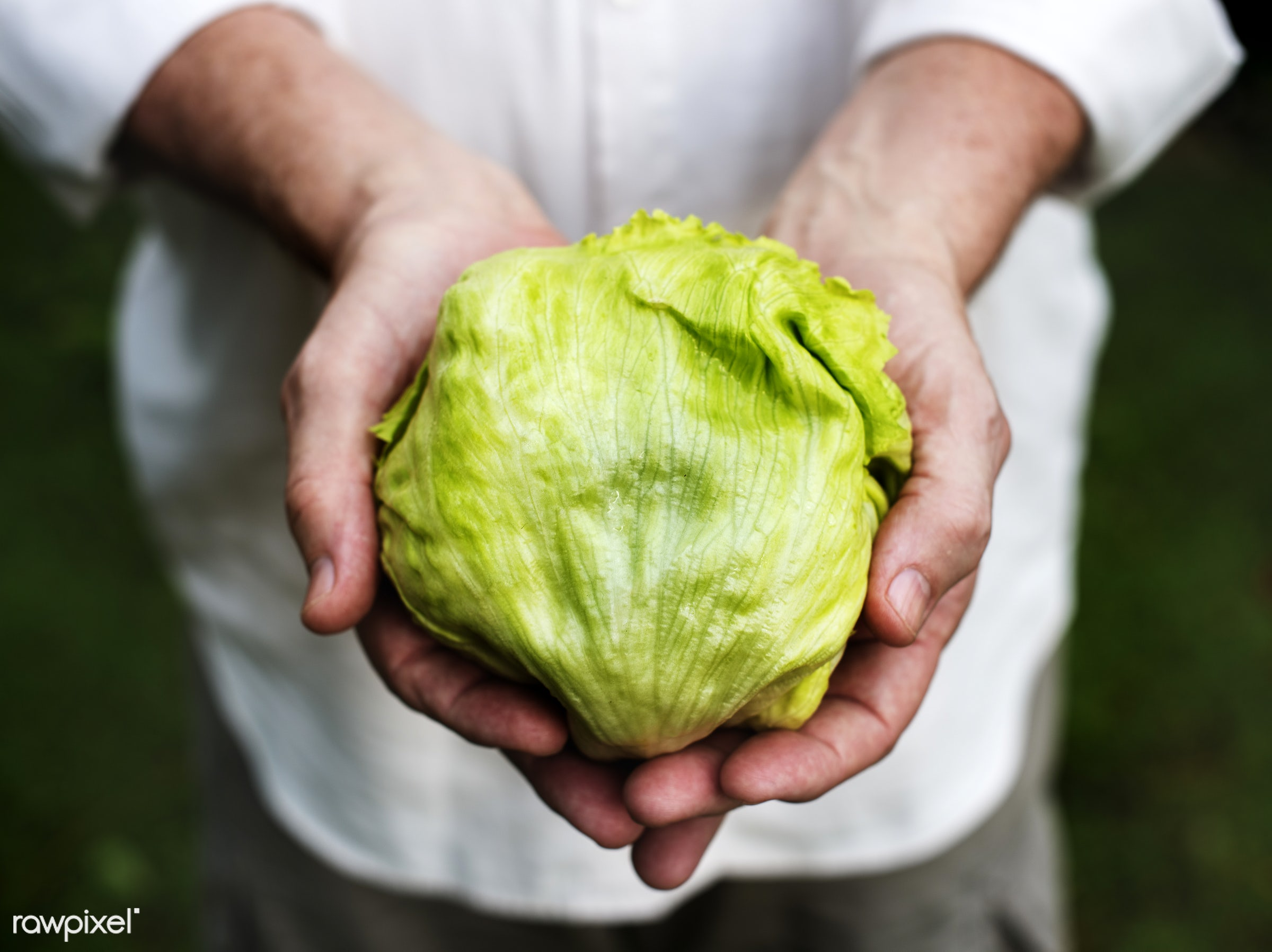 plant, raw, cuisine, crop, hands, fresh, ingredient, cultivation, pick, agriculture, farming, product, organic, nutrition,...