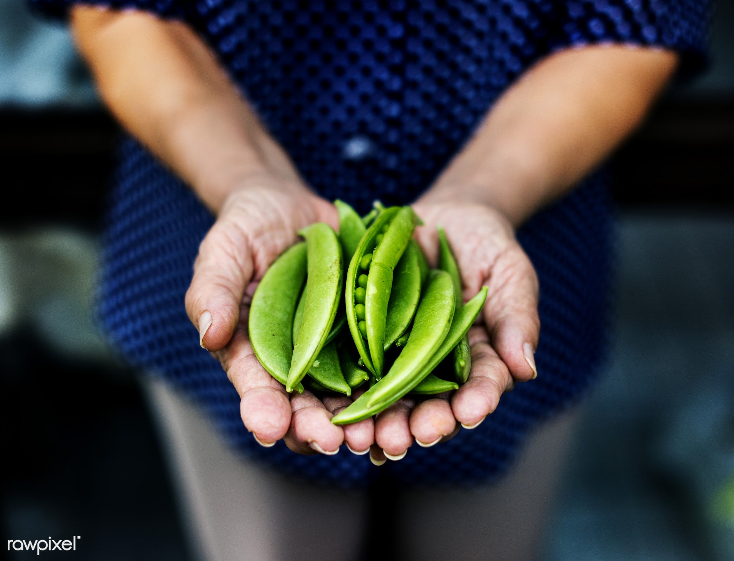 holding, real, hands, fresh, showing, closeup, healthcare, snacks, nutrients, organic, food, green beans, vegetable, peas