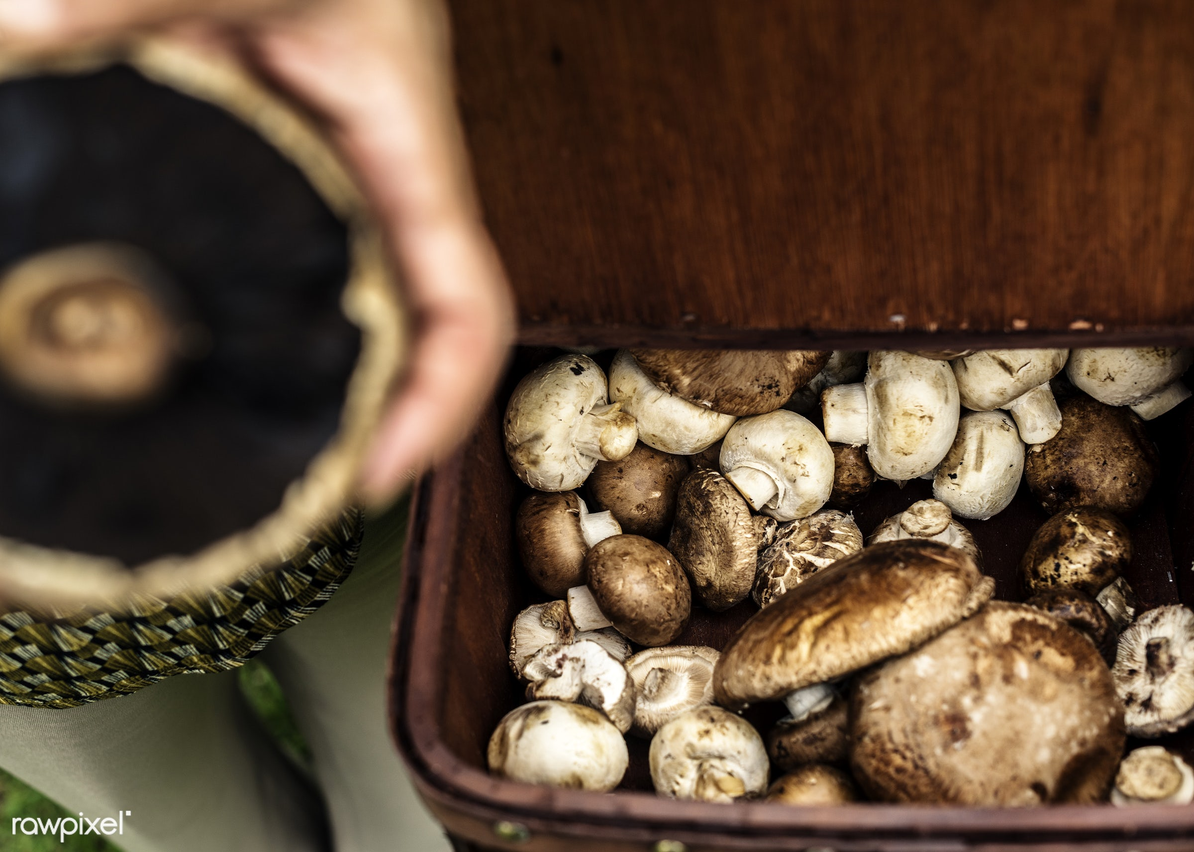 mushroom, plant, raw, cuisine, bucket, crop, hands, fresh, cultivation, pick, ingredient, agriculture, farming, product,...