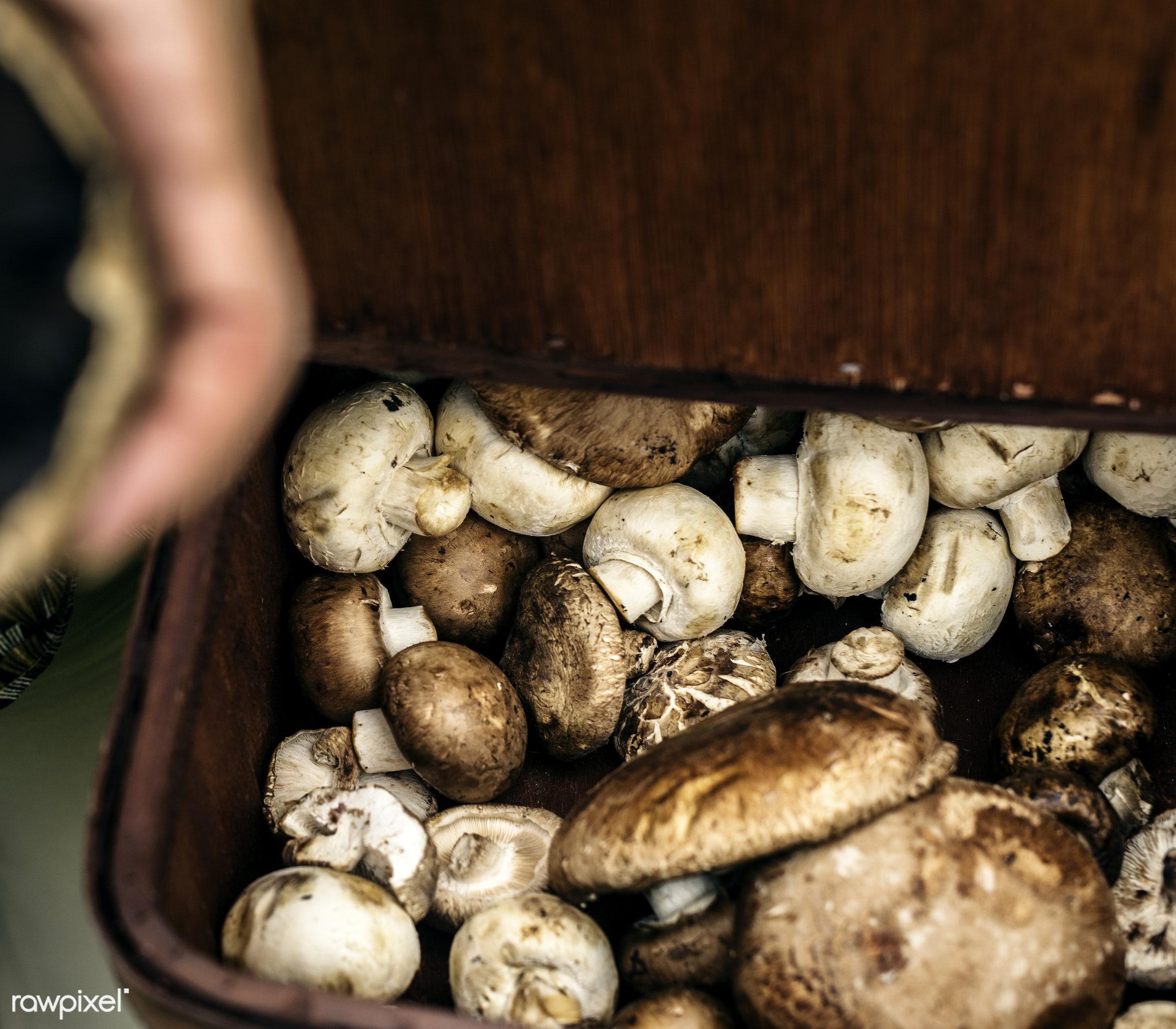 mushroom, holding, real, fresh, showing, wooden basket, closeup, healthcare, white button mushroom, nutrients, organic,...